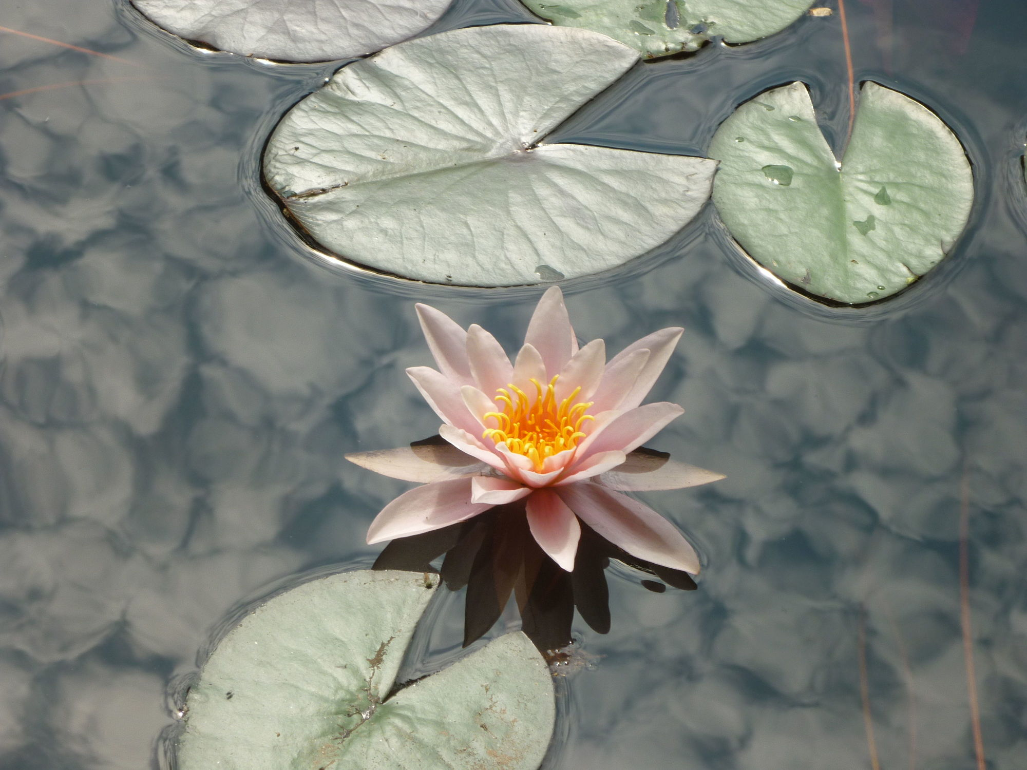 Bild mit Teich