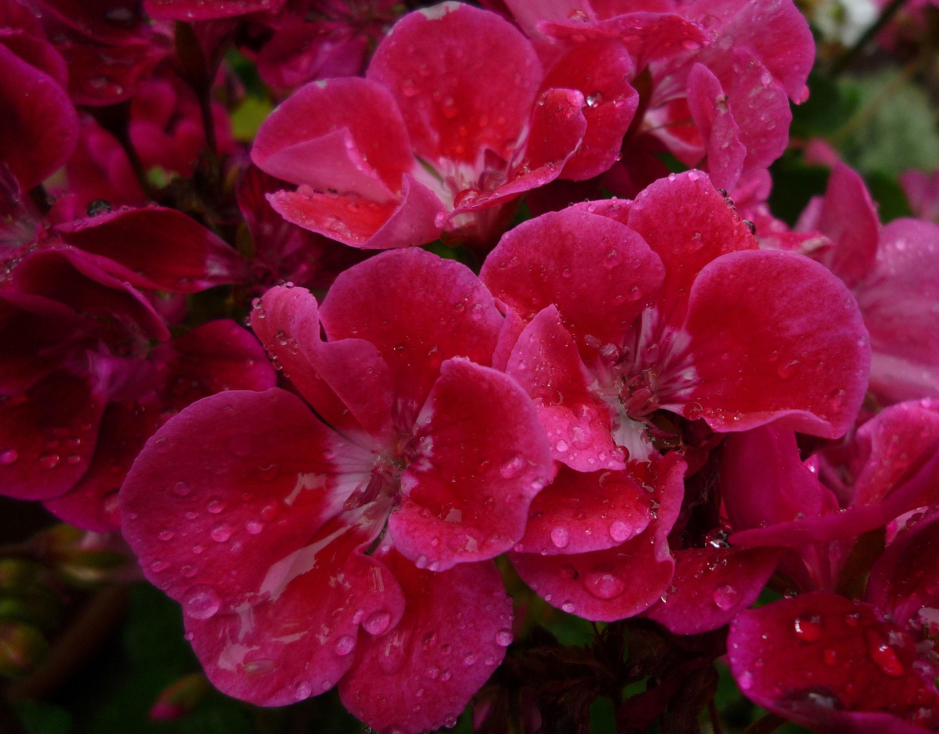 Bild mit regenblüten