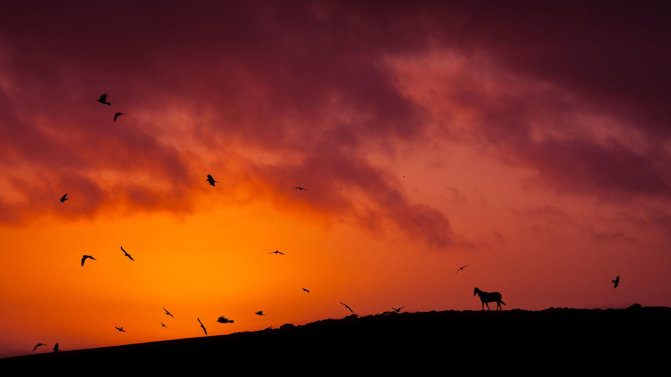 Bild mit Tiere, Natur, Sonnenuntergang, Sonnenaufgang, Sonne, Pferde, Pferde, Landschaft, Tier, Kinderbild, Kinderbilder, Feld, Pferd, Pferd, Felder, Wiesen, reiten, Pferdeliebe, pferdebilder, pferdebild