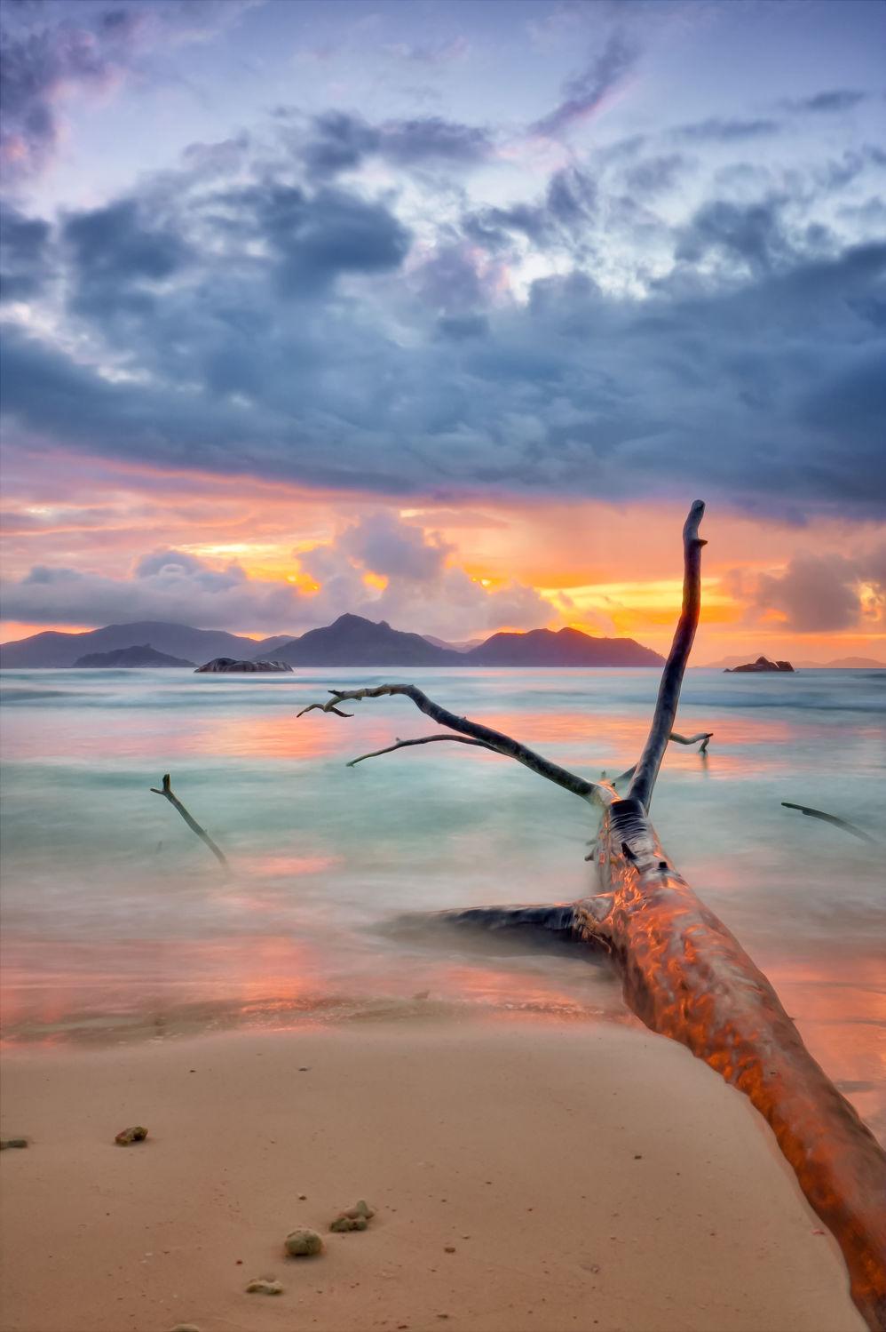 Bild mit Natur, Wasser, Gewässer, Baum, Strand, Sandstrand, Am Meer, Ast, ozean