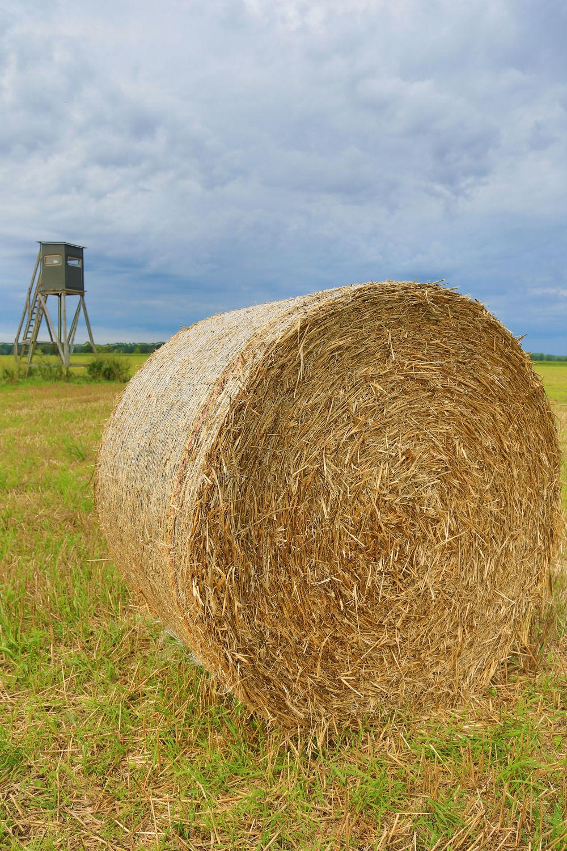 Bild mit Feld, Strohballen, Felder, landwirtschaft