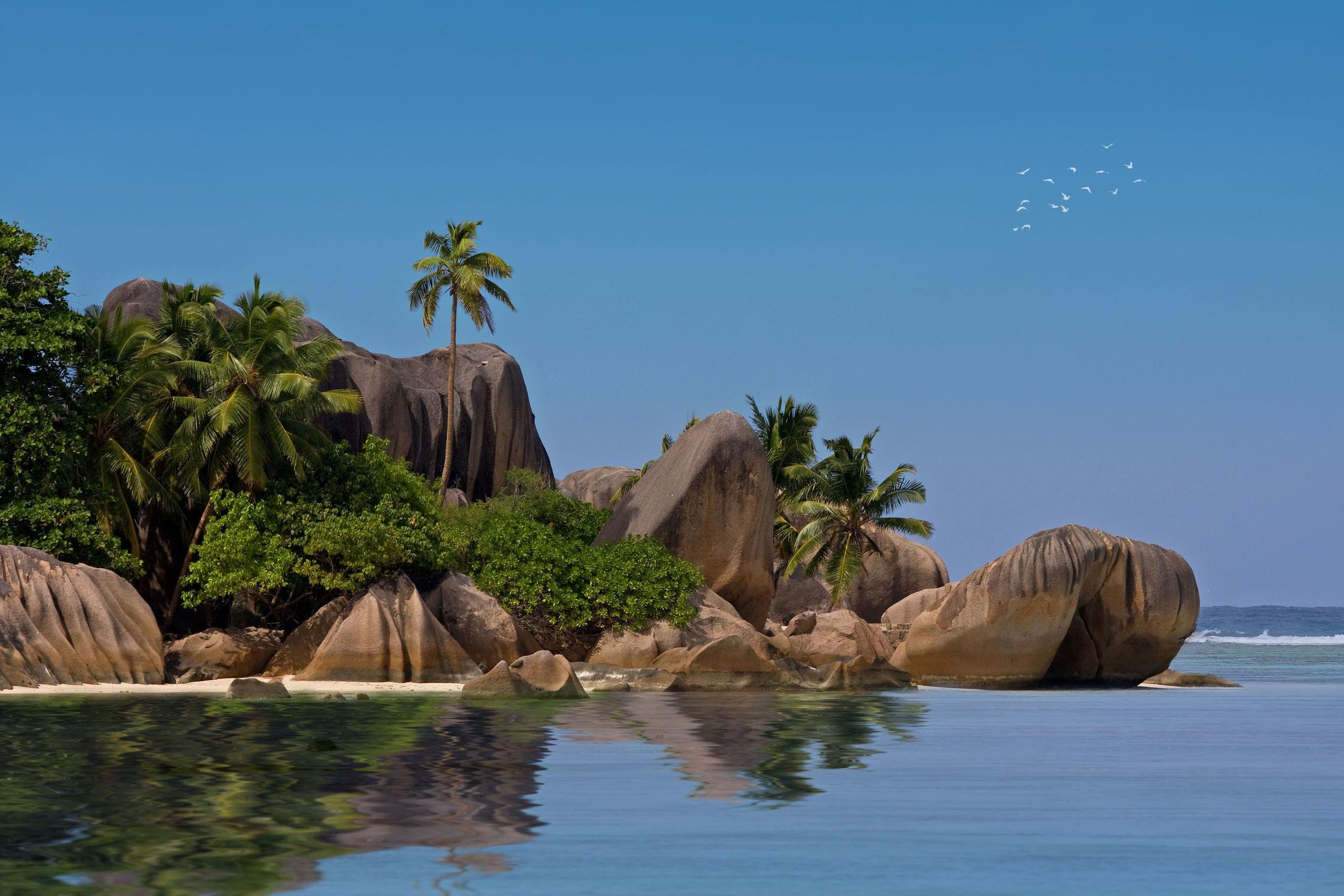 Bild mit Natur, Gewässer, Urlaub, Palmen, Strand, Meer, Palme, Insel, A U F . R E I S E N, island, ozean, Seychellen