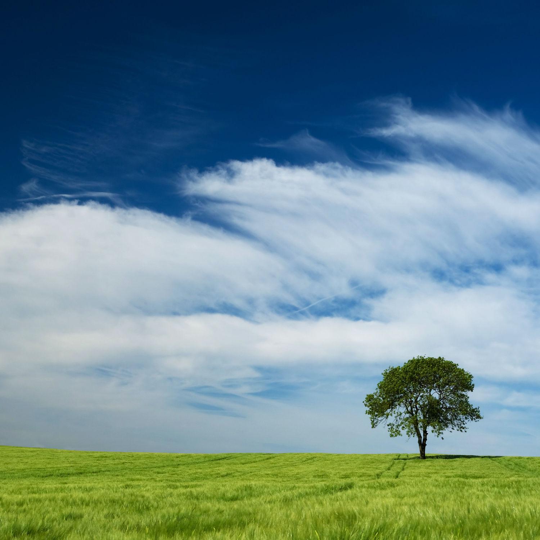 Bild mit Natur, Landschaften, Bäume, Baum, Landschaft, Wiese, Feld, Felder, Natur und Landschaft, Wiesen, Weide, Weiden