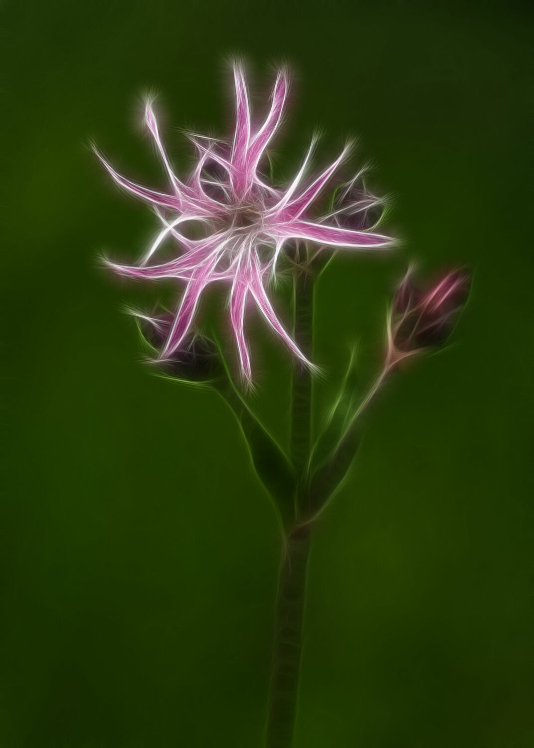 Bild mit Digital Art - Natur
