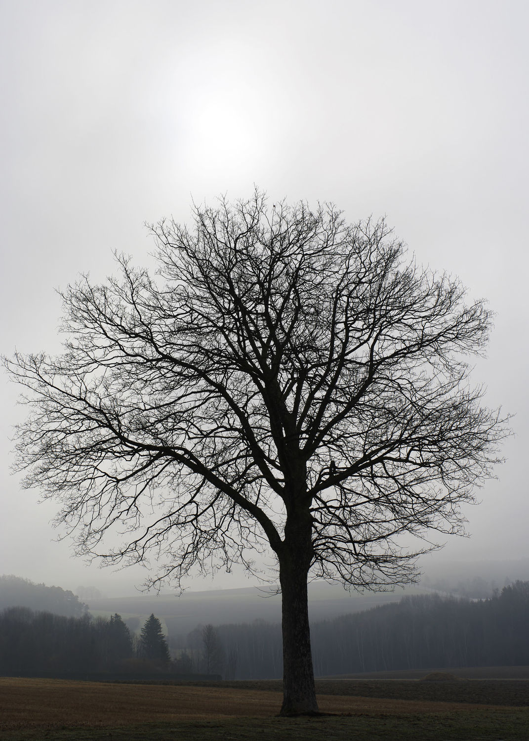 Bild mit Natur und Landschaft
