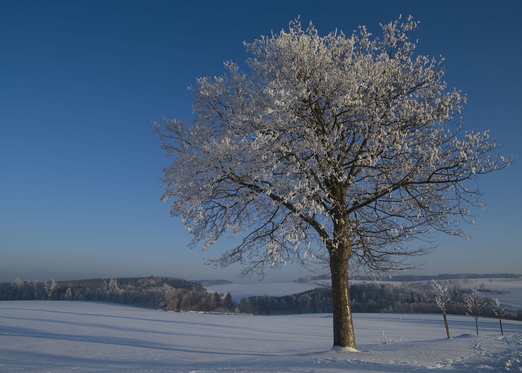 Bild mit Natur, Landschaften, Bäume, Winter, Schnee, Baum, Landschaft, Natur und Landschaft, Winterzeit