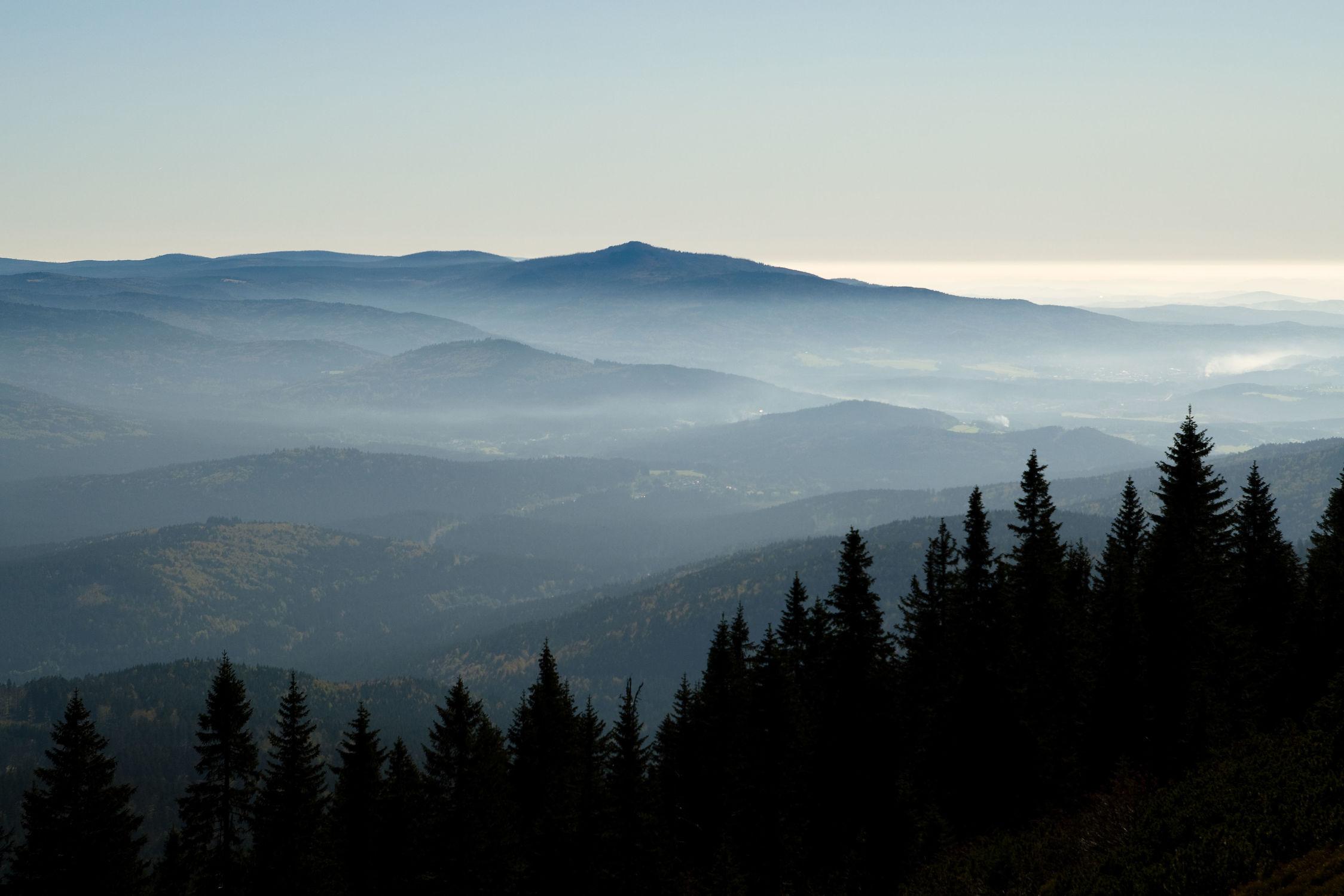 Bild mit Natur, Landschaften, Bäume, Wälder, Herbst, Nebel, Wald, Baum, Landschaft