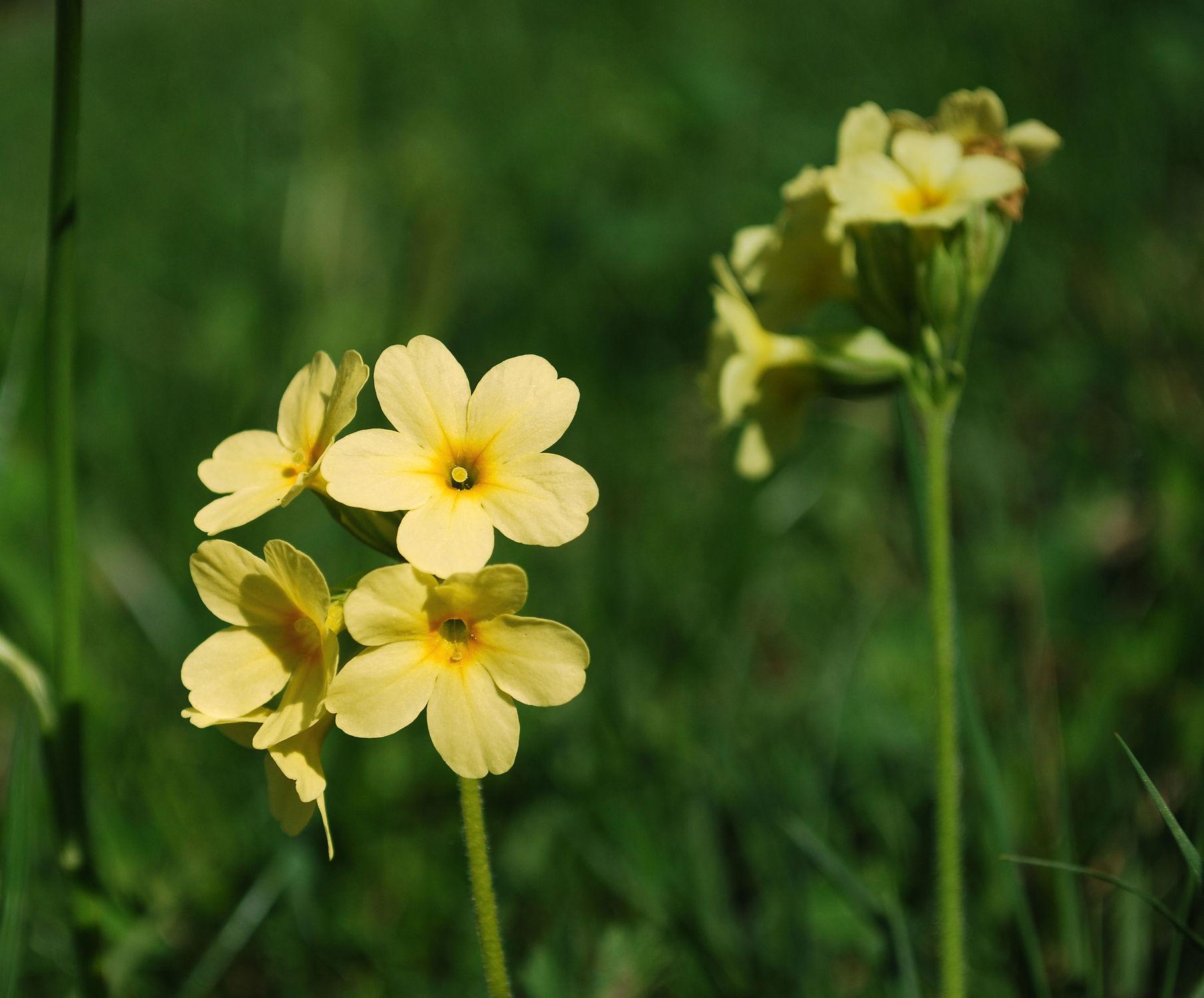 Bild mit Natur, Blumen, Blume, Wiese, In Natura, Wiesen