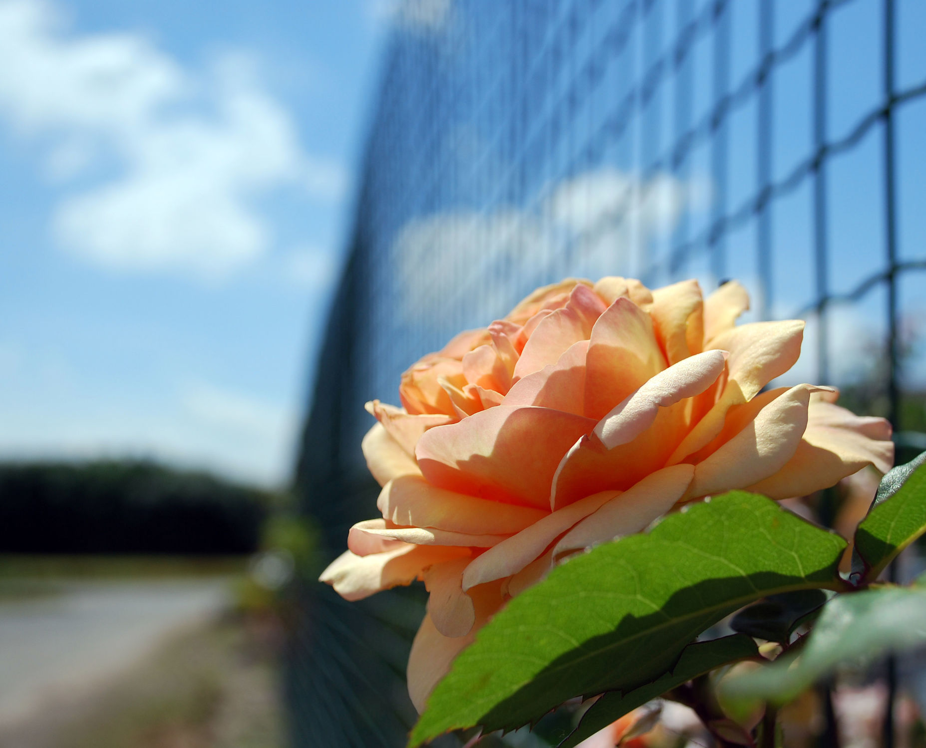 Bild mit Blumen und Pflanzen