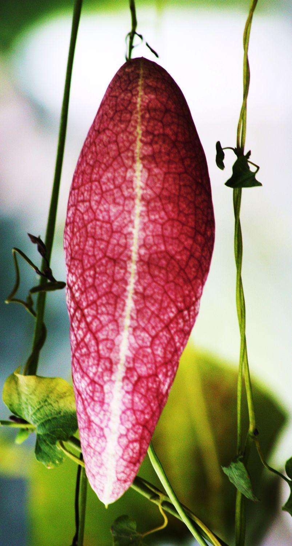 Bild mit Bunte Blumenpracht