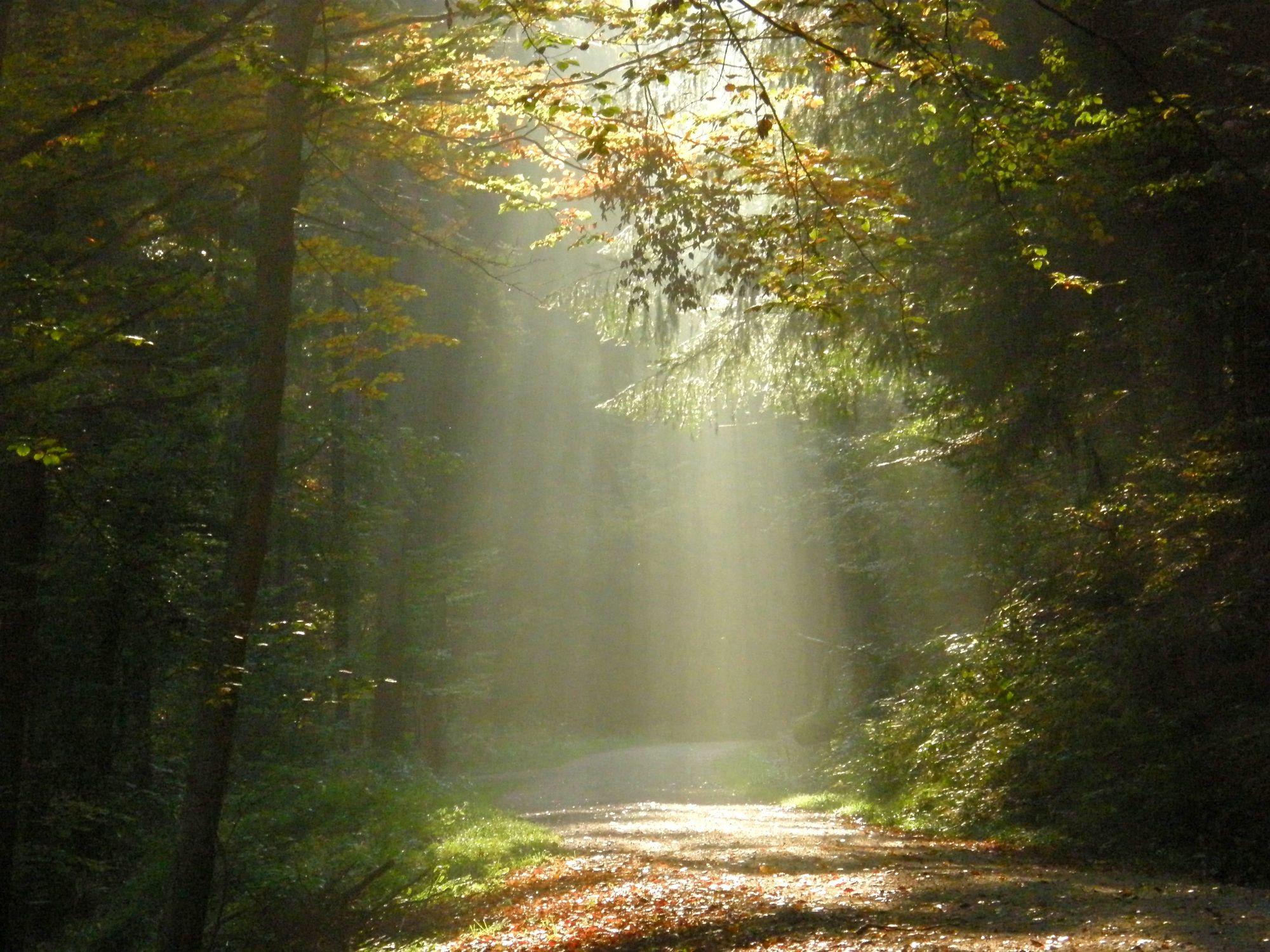 Bild mit Natur, Wälder, Wege, Wald, Lichtung, Weg, Spaziergang, Strahlen, spaziergänge