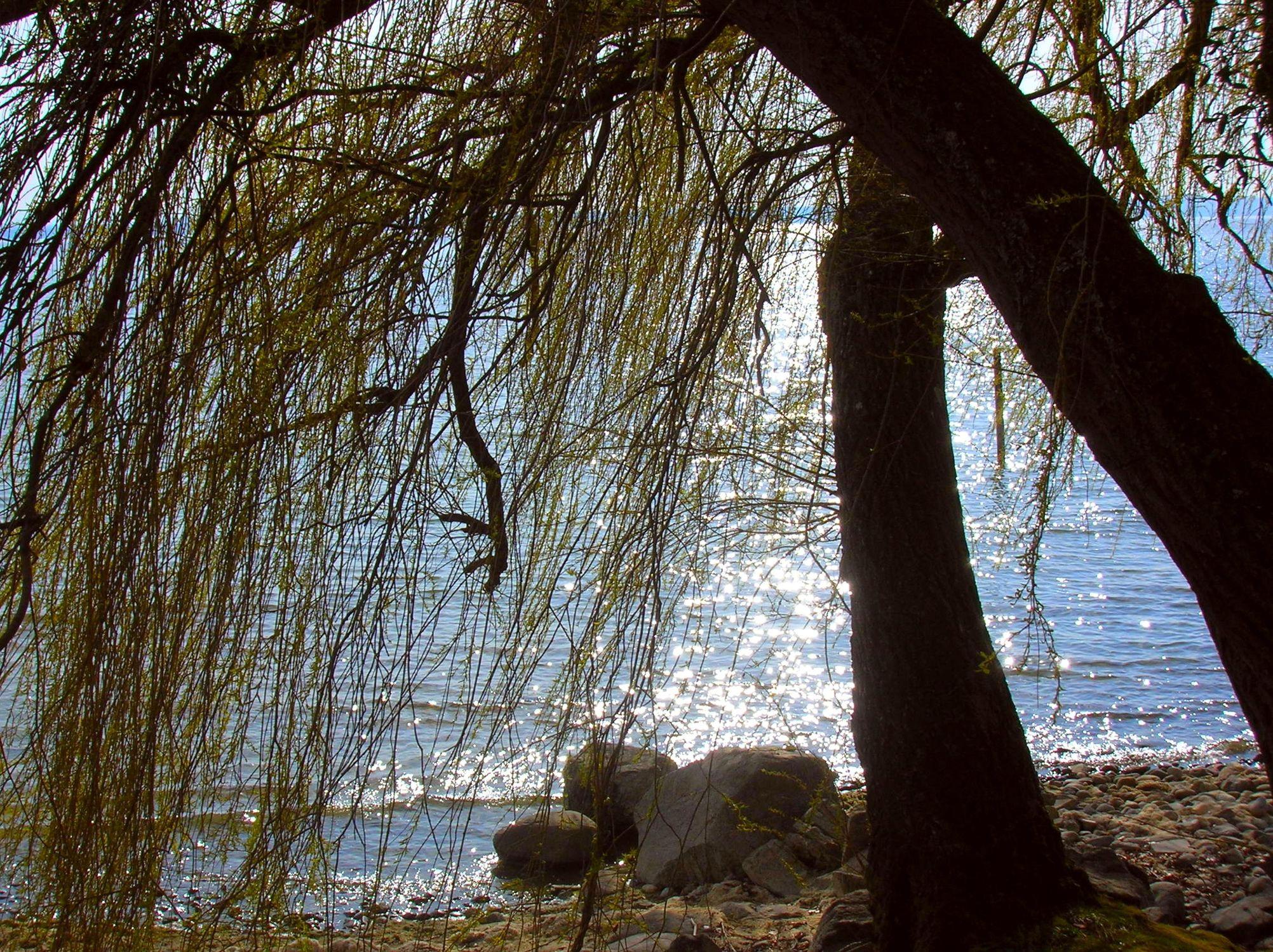Bild mit Laub- und Nadelbäume