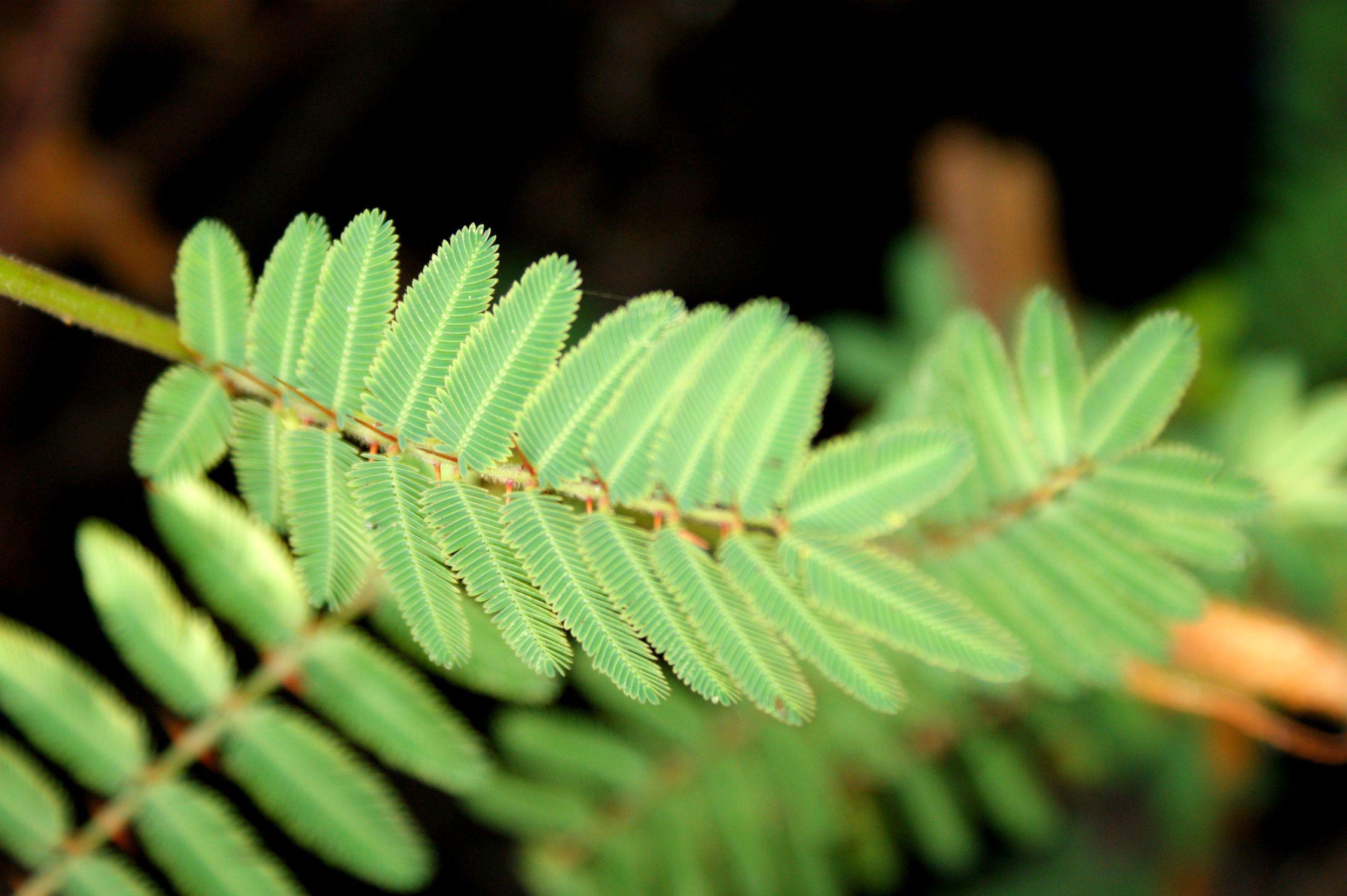Bild mit Grünpflanzen