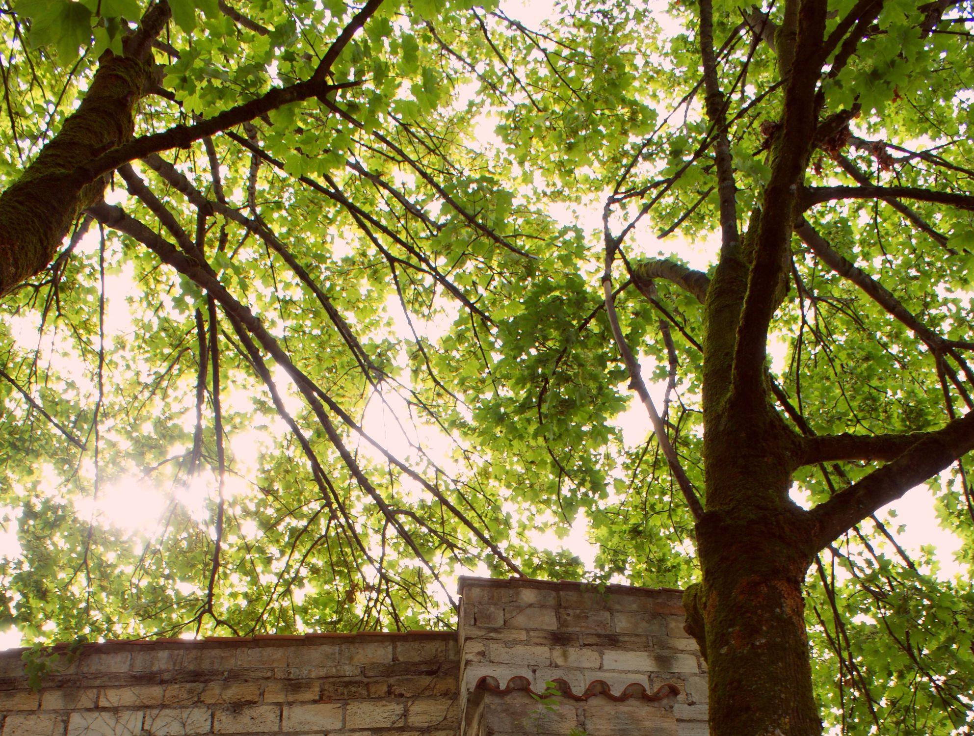 Bild mit Natur, Himmel, Bäume, Baum, Sonnenstrahlen