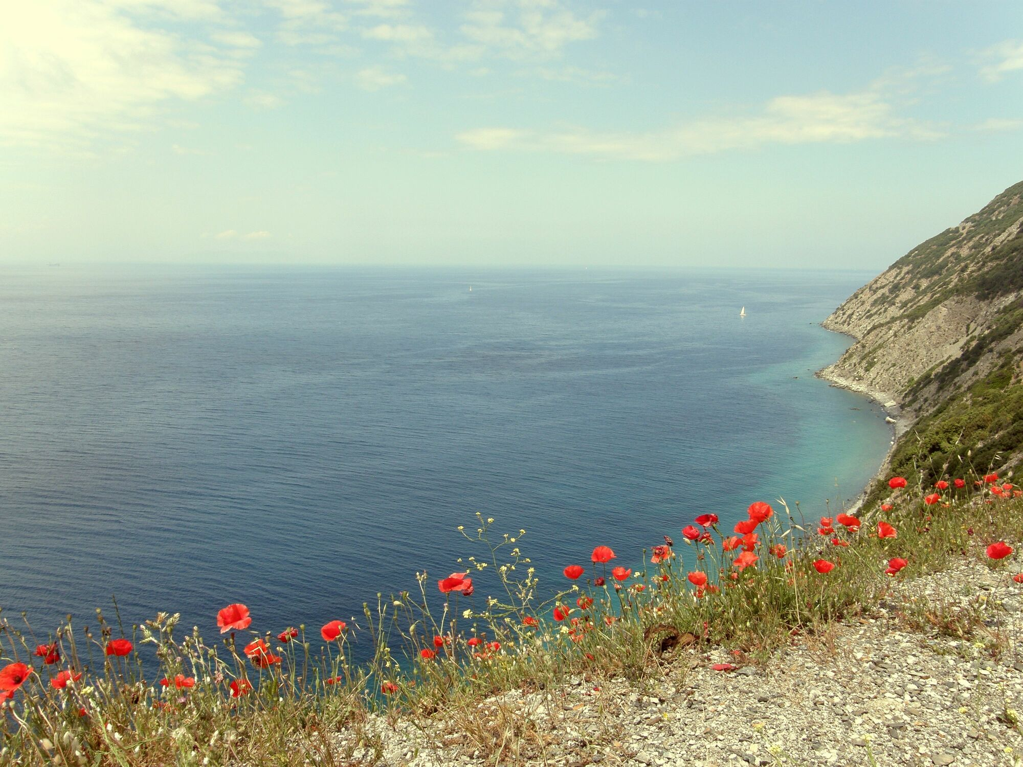 Bild mit Blumen, Blume, Wiese, Felder, Sehnsucht nach Meer, Blumenwiesen, Wiesen, blumenwiese