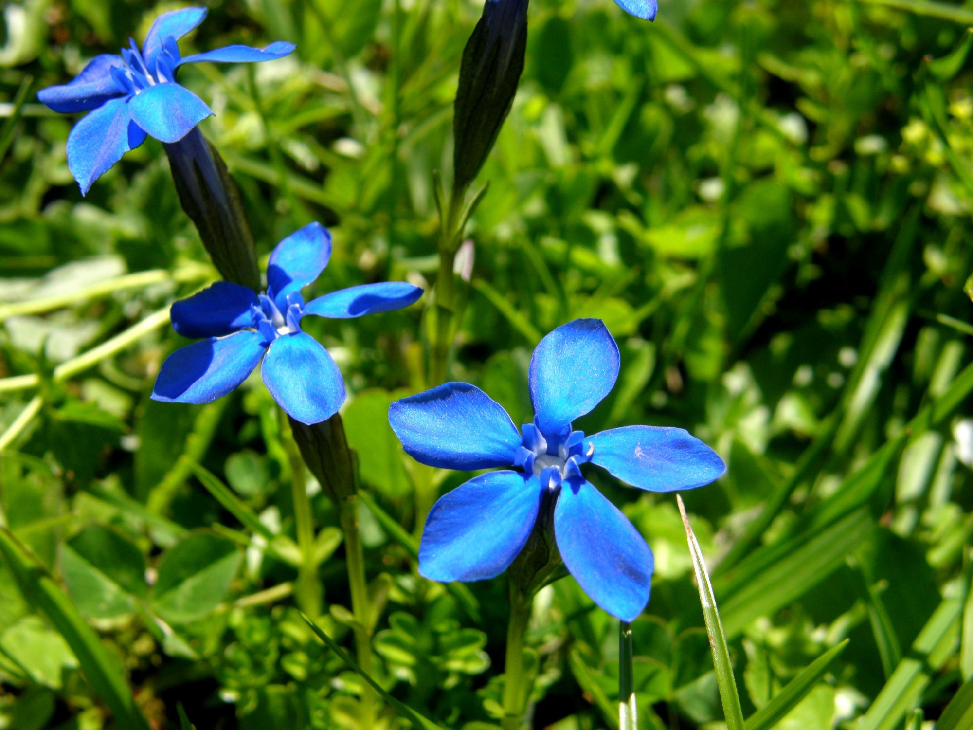 Bild mit Berge, Blumen, Frühling, Blau, Blume, Blütenzauber, berg