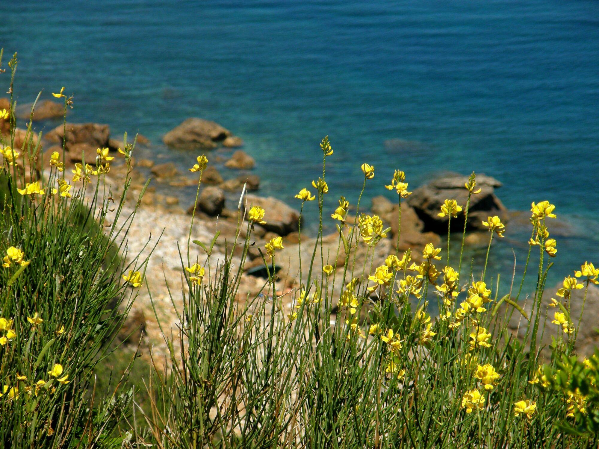 Bild mit Natur, Blumen, Strände, Italien, Strand, Meerblick, Meer, Sehnsucht nach Meer, ozean