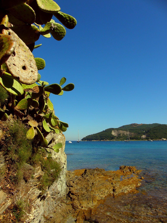 Bild mit Gewässer, Felsen, Strände, Urlaub, Italien, Strand, Meer, Insel, Sehnsucht nach Meer, kakteen, Kaktus, Fels