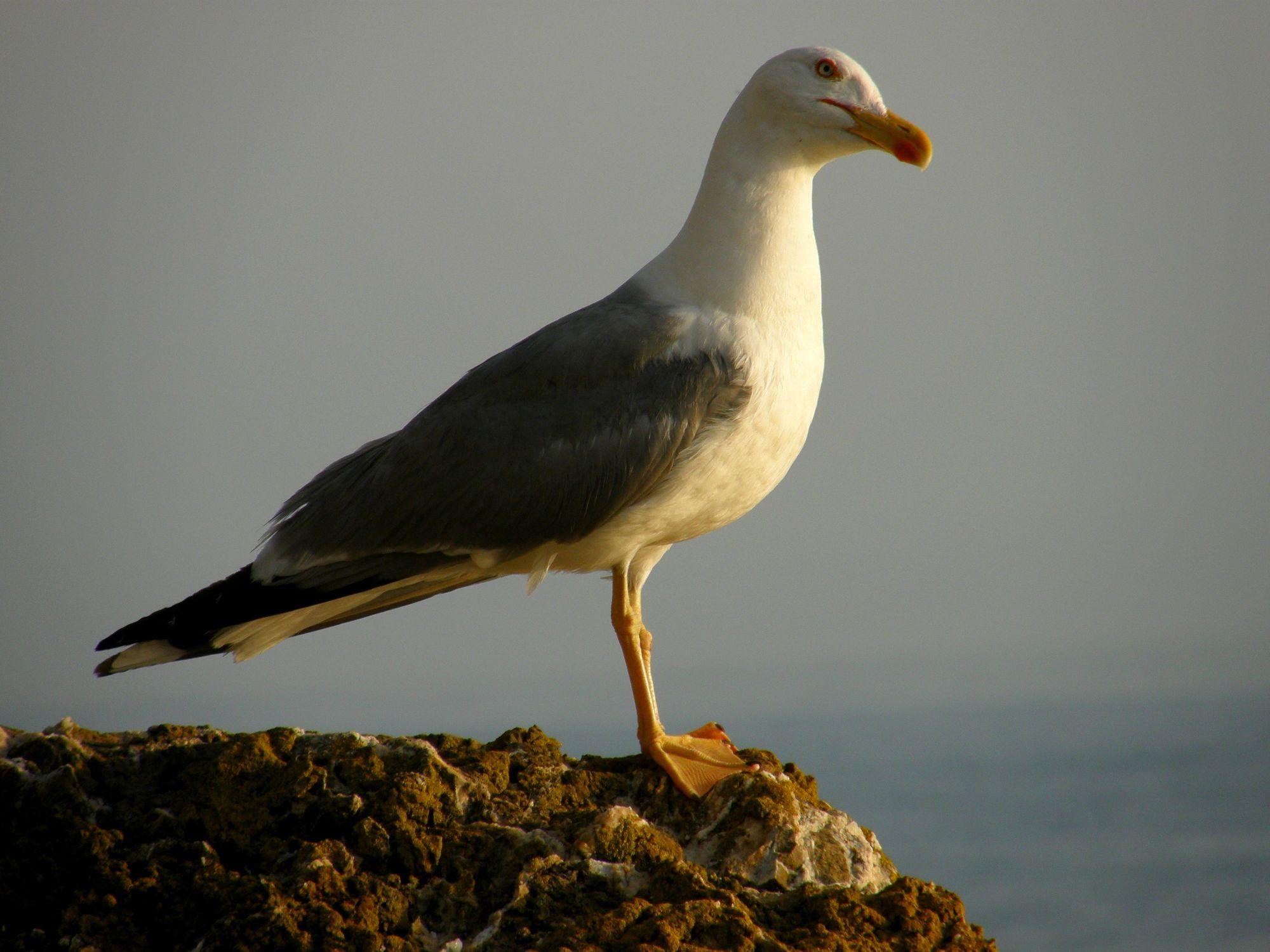 Bild mit Tiere, Vögel, Möwen, Meer, Tier, Möwe, Möve, Tierwelt, Möven
