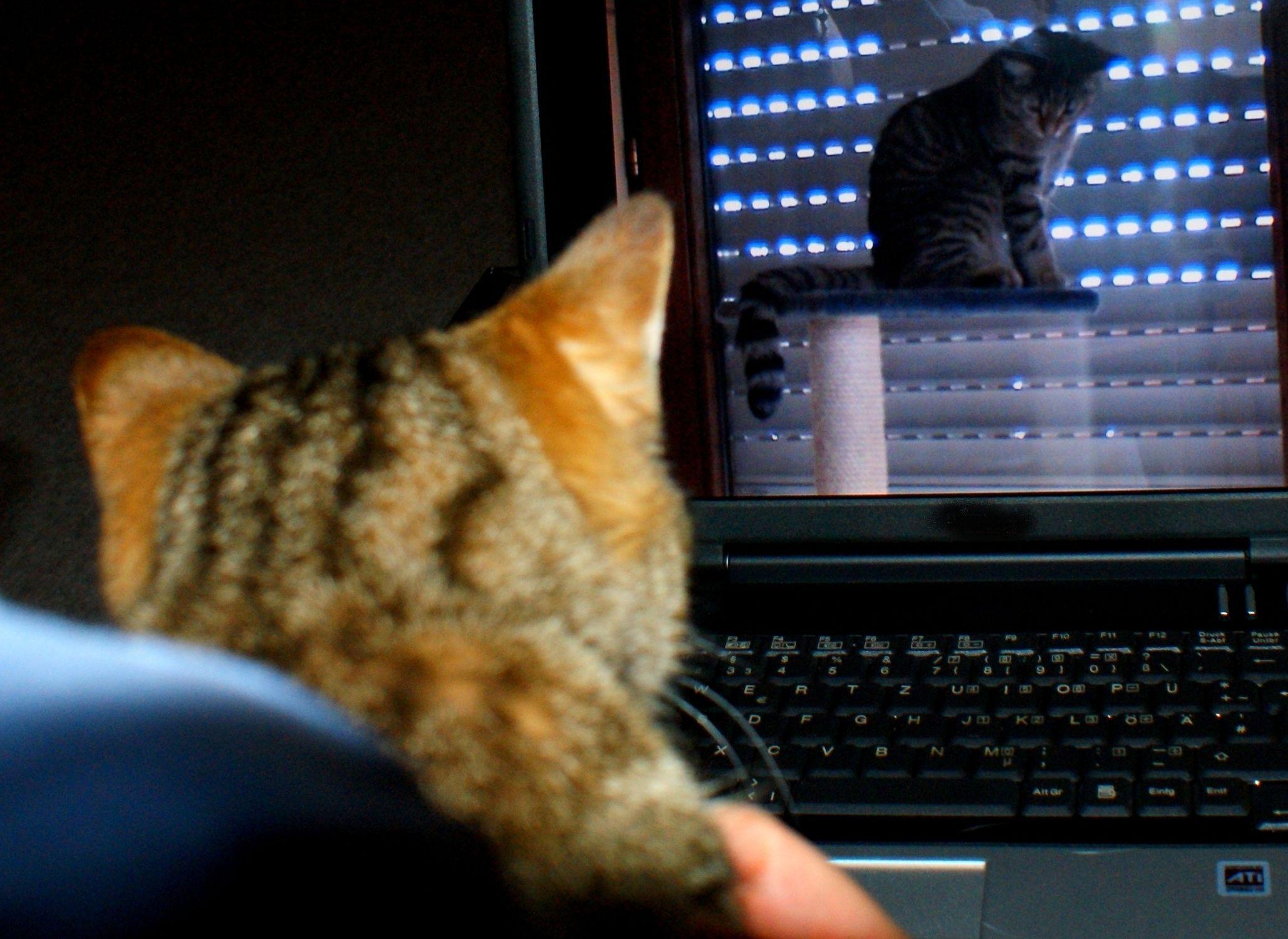 Bild mit Katzenbilder
