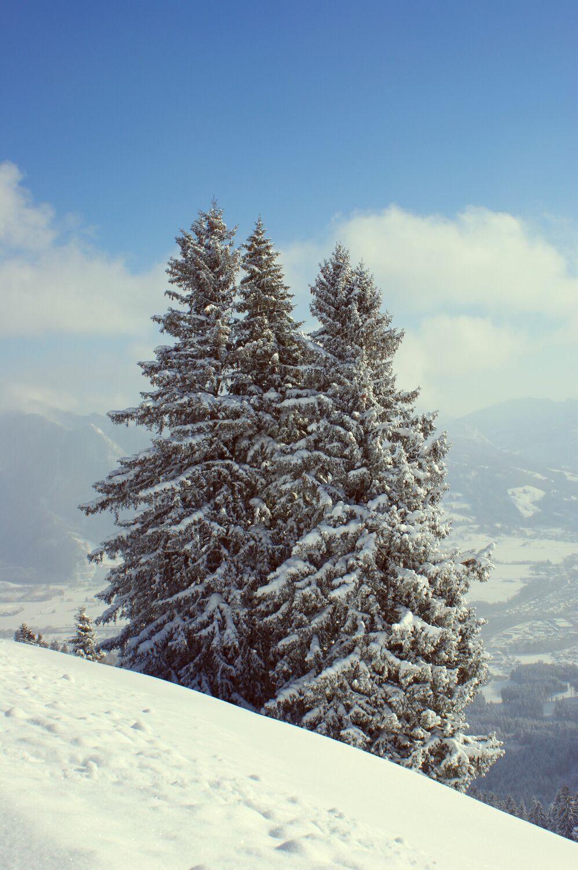 Bild mit Landschaften, Bäume, Schnee, Tannen, Baum, winterlandschaft, Allgäu, schneelandschaft
