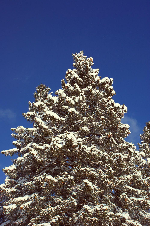Bild mit Bäume, Schnee, Tannen, Baum, Allgäu