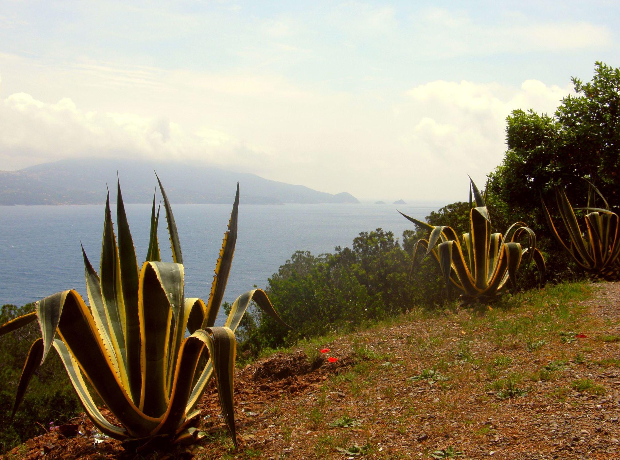 Bild mit Pflanzen, Berge, Sandstrand, Meer, Wiese, Wiesen, Sehnsucht, Pinienbäume