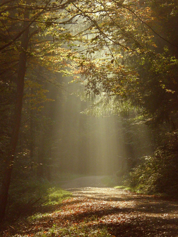 Bild mit Natur, Bäume, Wälder, Wege, Sonne, Wald, Baum, Weg, Strahlen
