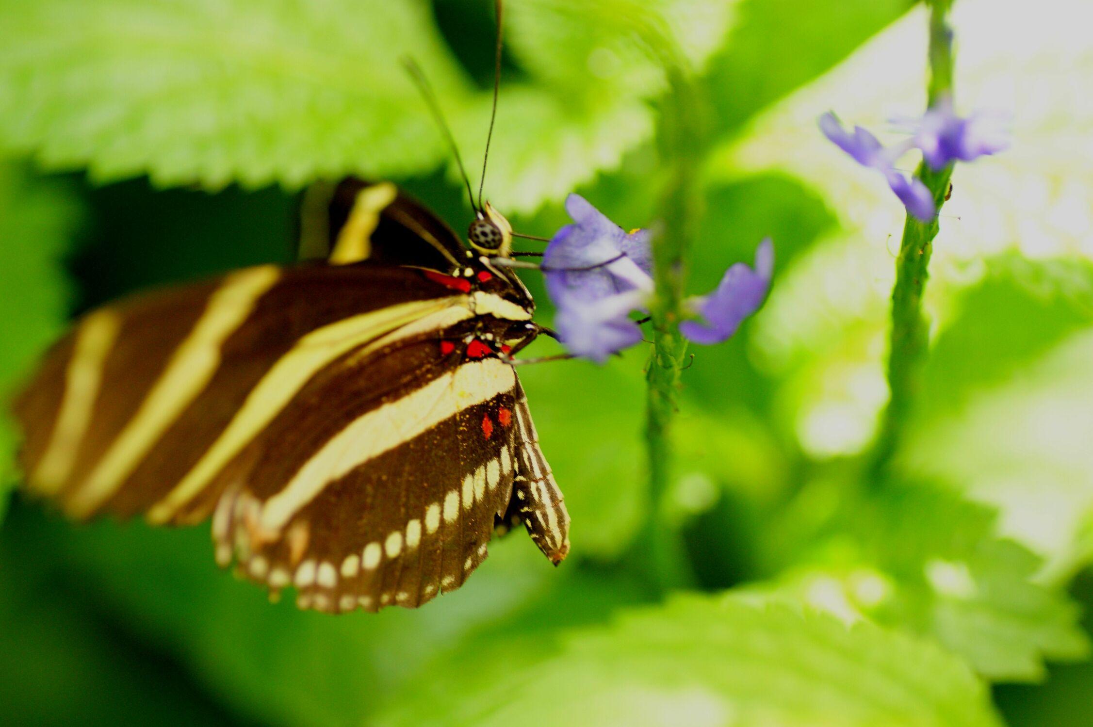 Bild mit Tropical Butterflies