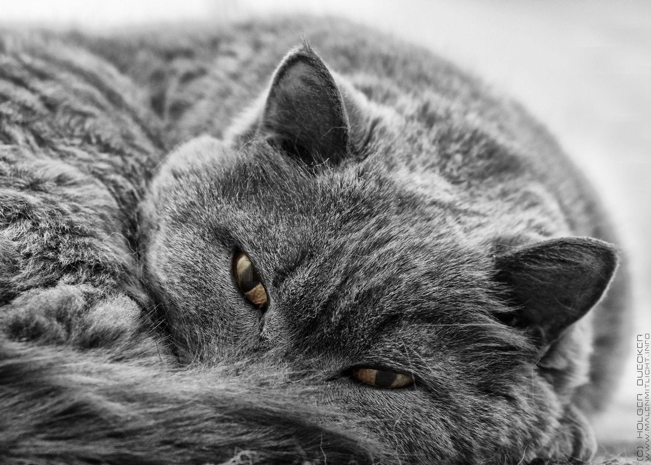 Bild mit Haustiere, Katzen, Katze, Kater, Haustier, hauskatzen, hauskatze, heimkatze, heimkatzen