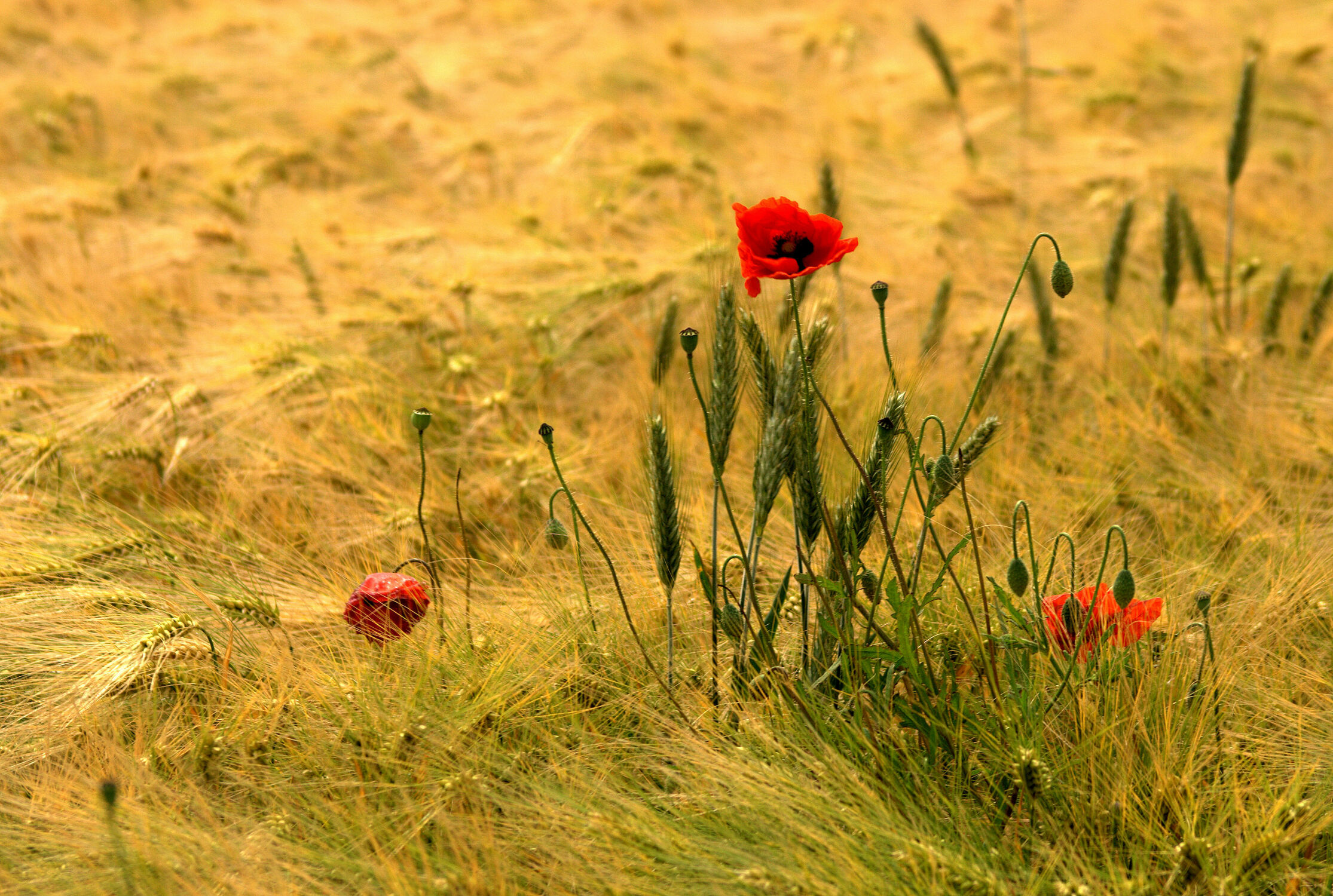 Bild mit Flora