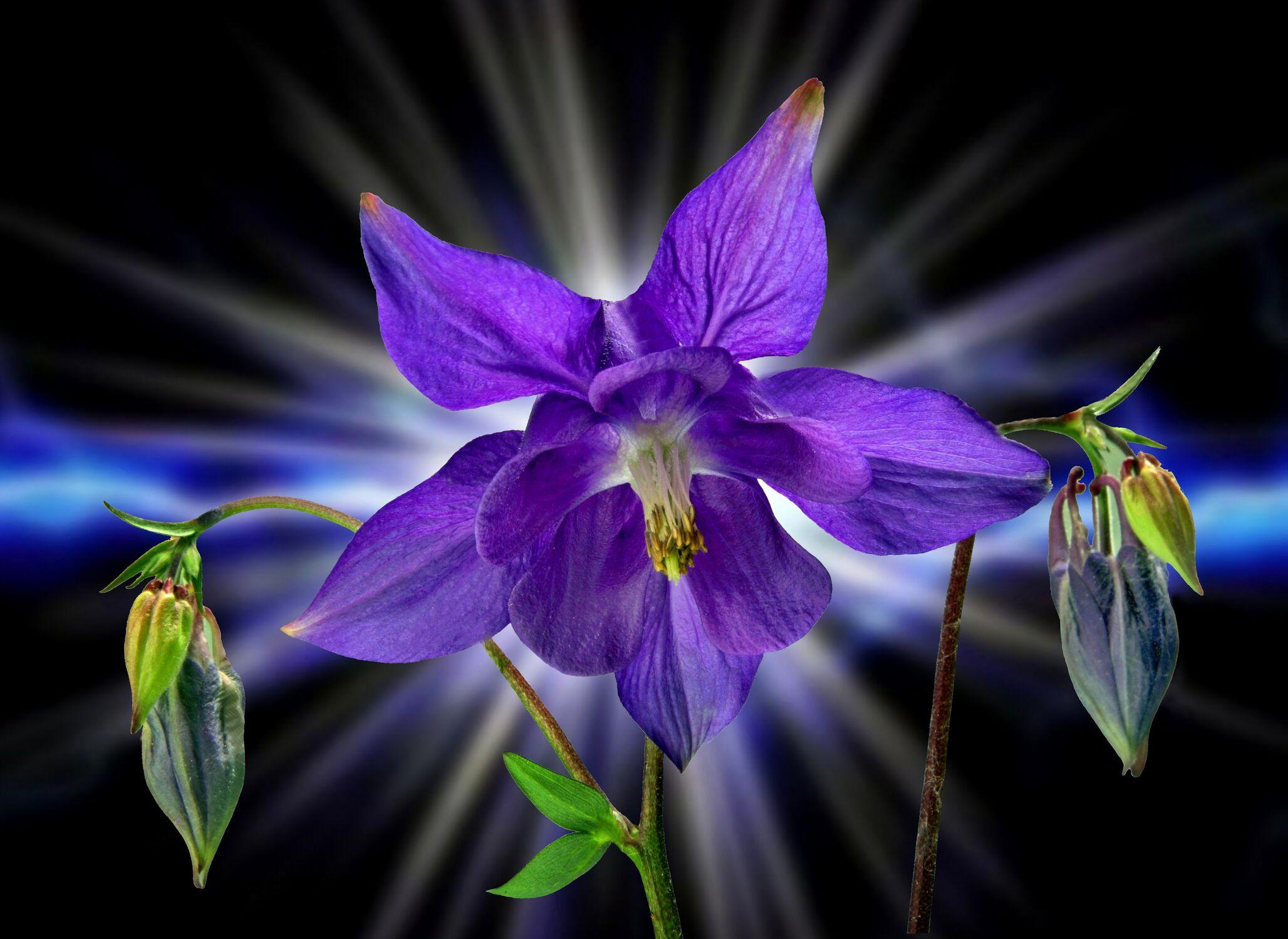 Bild mit Pflanzen, Blumen, Blume, Pflanze, Floral, Stilleben, Blüten, Florales, blüte, stern