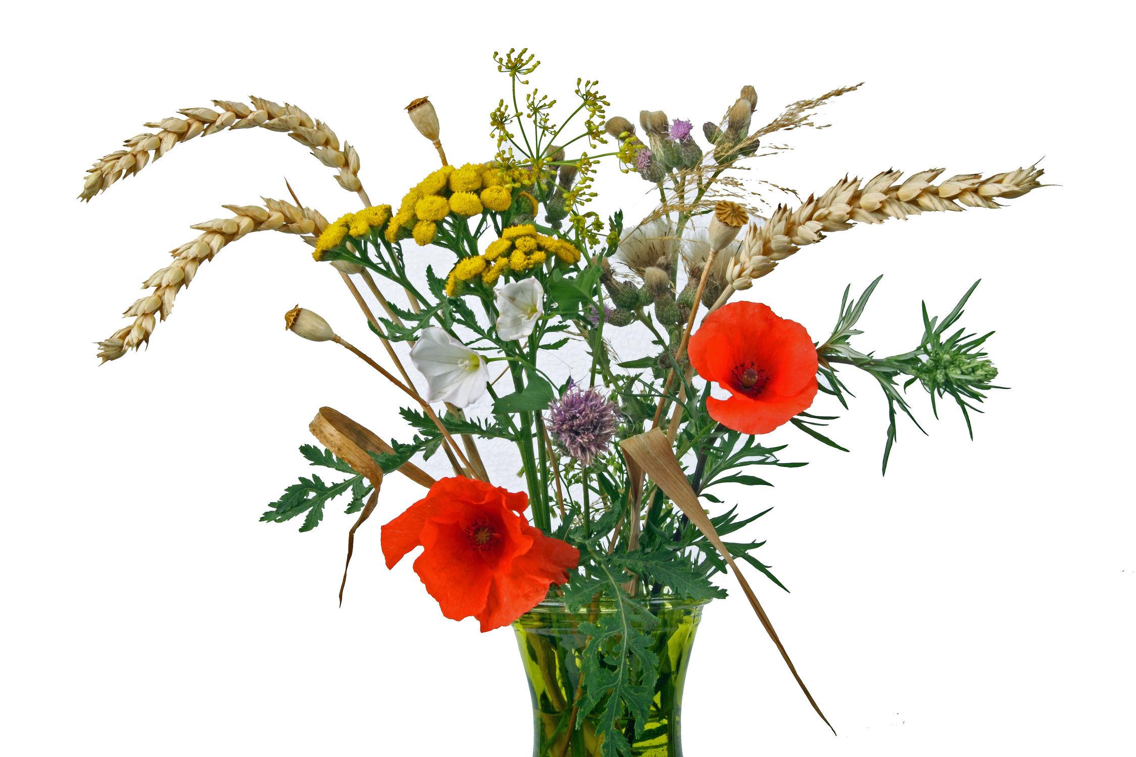 Bild mit Pflanzen, Blumen, Getreide, Mohn, Blätter, Blume, Pflanze, Mohnblüte, Blumenstrauß, Feldblumen, Floral, Blüten, Florales, vase