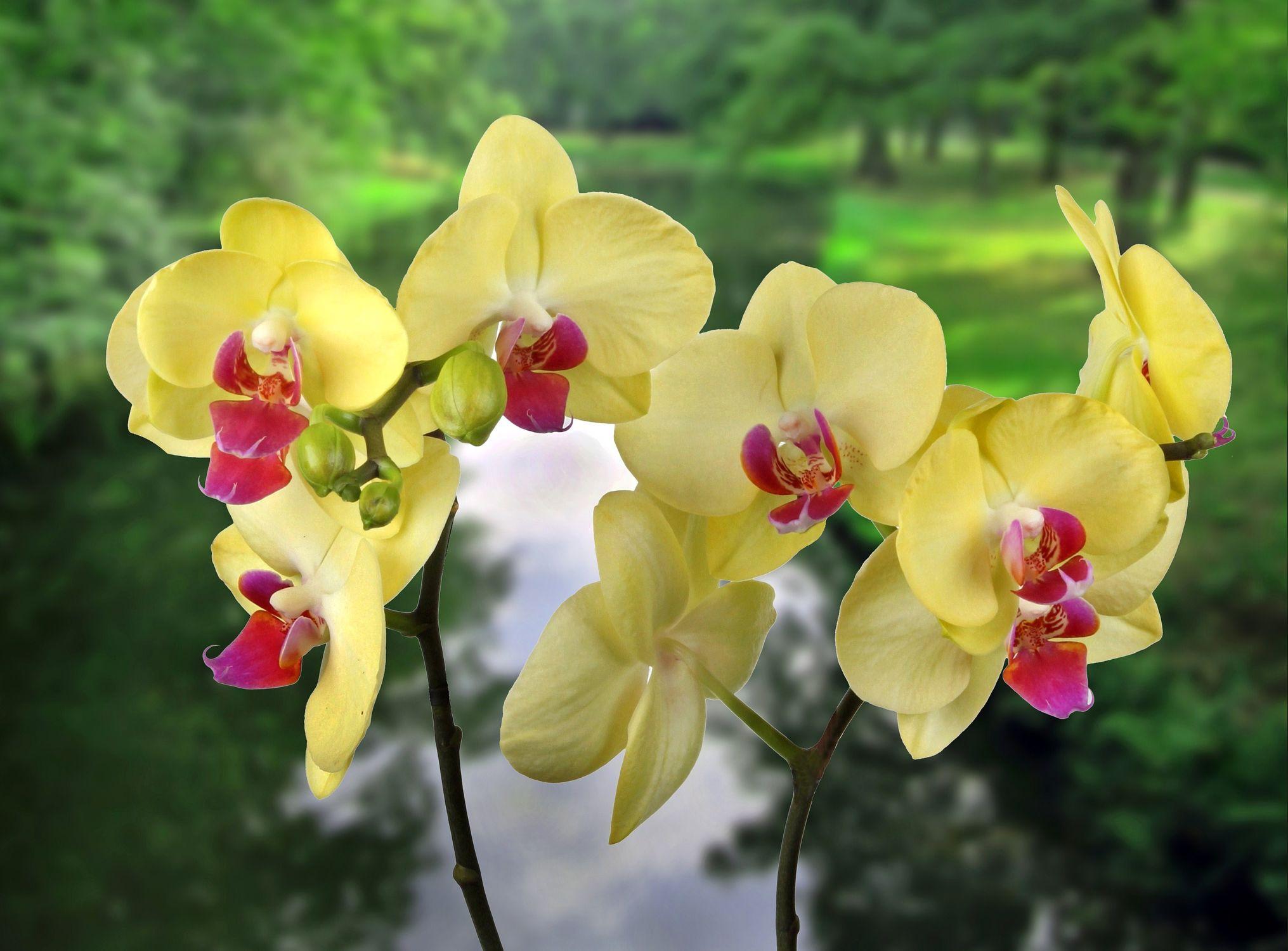 Bild mit Wasser, Pflanzen, Bäume, Blumen, Orchideen, Baum, Blume, Orchidee, Pflanze, Bach, Park, Floral, Stilleben, Blüten, Florales, garten, blüte, Fluss