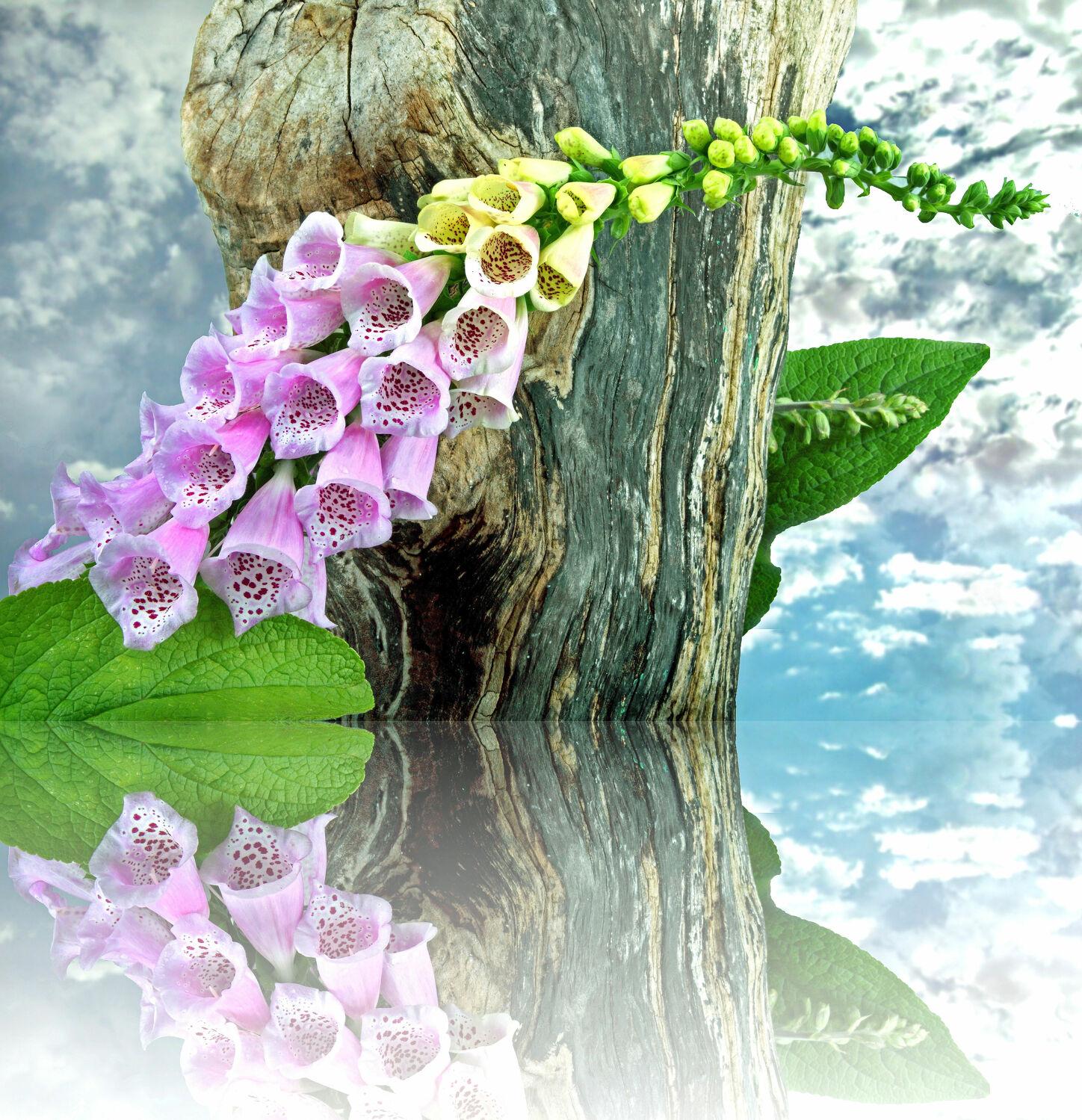 Bild mit Pflanzen, Himmel, Wolken, Blumen, Baum, Baumstamm, Blätter, Blume, Pflanze, Blatt, Blüten, blüte, fingerhüte, fingerhut