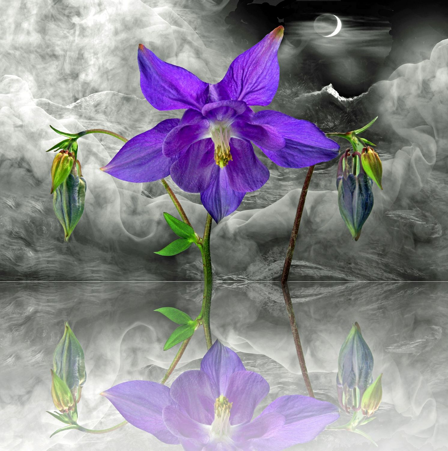 Bild mit Pflanzen, Himmel, Wolken, Reflexion, Blumen, Nebel, Sonne, Blume, Pflanze, Spiegelung, Floral, Stilleben, Blüten, Florales, blüte, Akelei