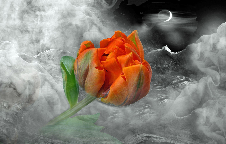 Bild mit Kunst, Pflanzen, Himmel, Wolken, Blumen, Nebel, Sonne, Landschaft, Blume, Pflanze, Tulpe, Tulpen, Abstrakt, Floral, Stilleben, Blüten, Florales, blüte