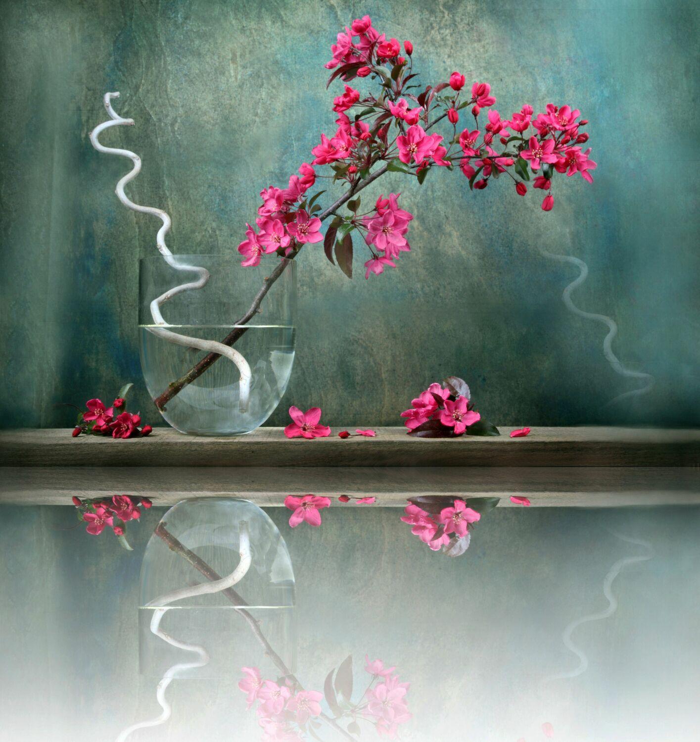Bild mit Pflanzen, Reflexion, Blumen, Blume, Pflanze, Spiegelung, Floral, Stilleben, Blüten, Florales, Wellness, Textur, blüte, Zweige, Blumenvase, Zweig, zen, vase