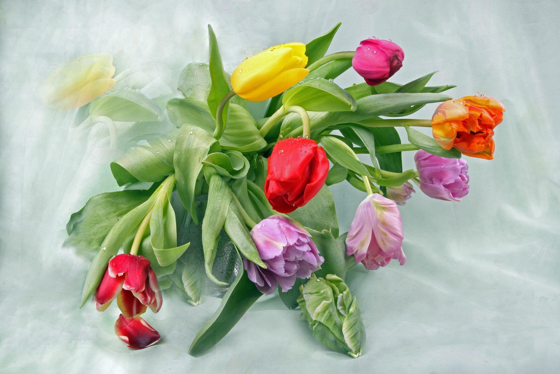 Bild mit Natur, Pflanzen, Blumen, Blume, Pflanze, Tulpe, Tulpen, Wassertropfen, Floral, Blüten, Florales, Wellness, blüte