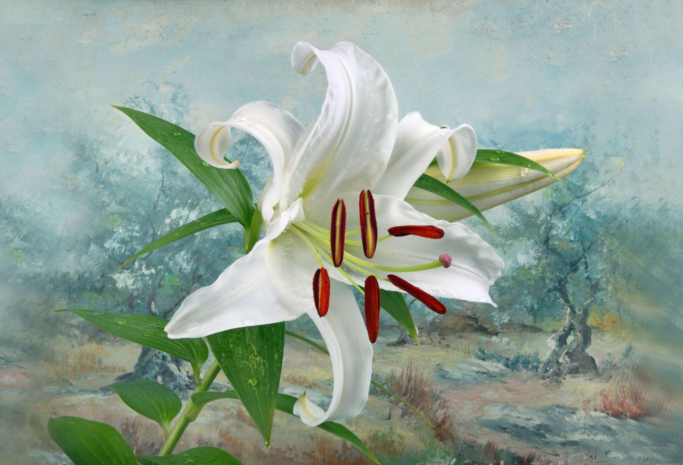 Bild mit Natur, Bäume, Blumen, Blume, Pflanze, Lilie, Floral, Toskana, Stilleben, Blüten, Florales, blüte, toscana