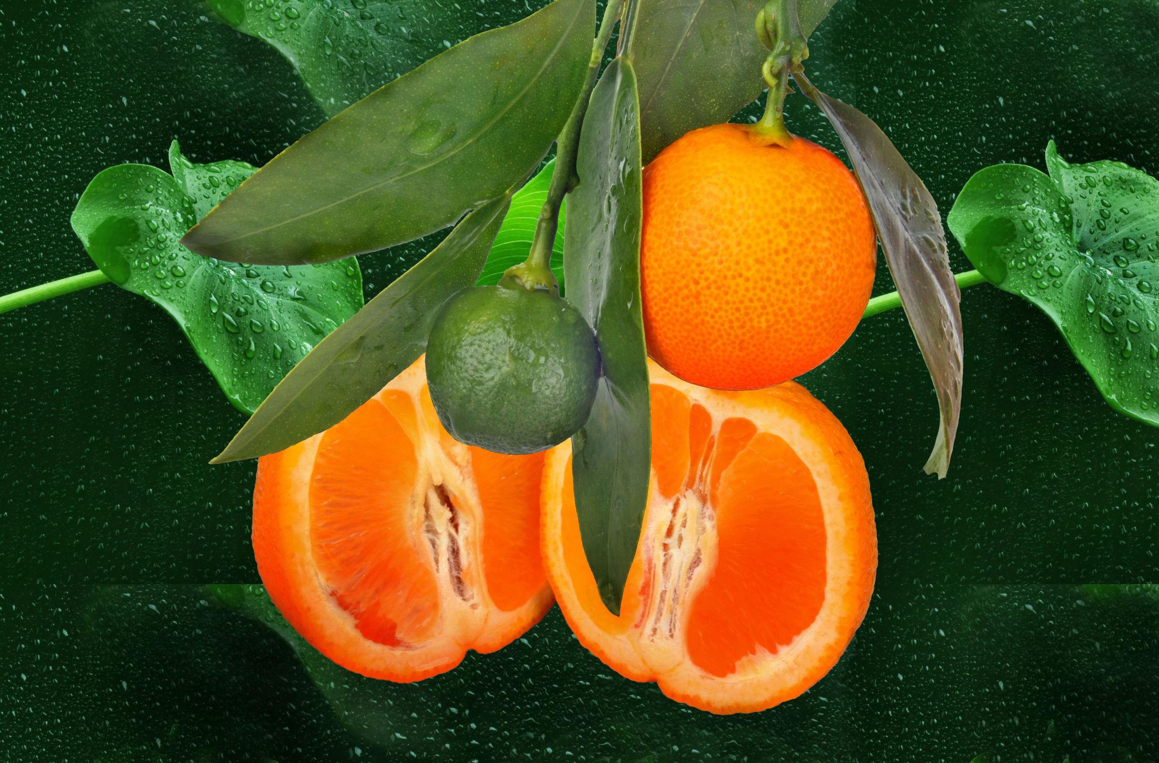 Bild mit Orange, Früchte, Orangen, Frucht, Obst, Küchenbild, Wassertropfen, Food, Küchenbilder, KITCHEN, frisch, Küche, Küchen, Apfelsine, Apfelsinen, kochen