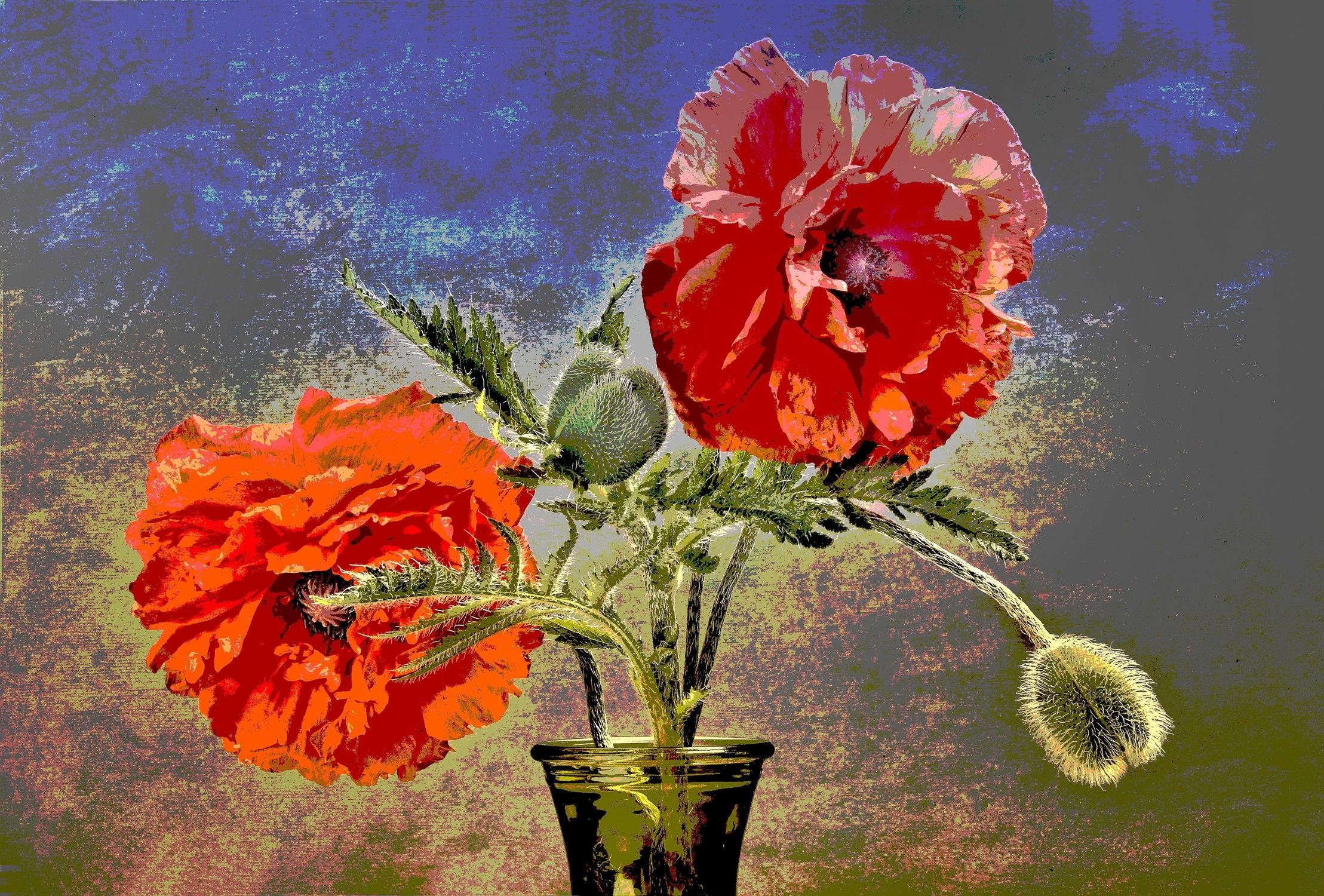 Bild mit Mohnblume, Mohneblumen, Zeichnung von Mohnblumen, Illustration Mohnblumen, Blumenvase