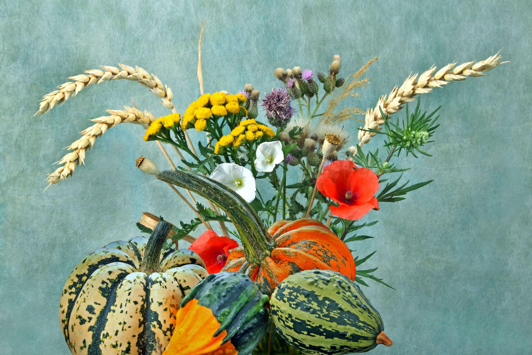 Bild mit Pflanzen, Blumen, Getreide, Mohn, Blume, Pflanze, Feldblumen, Floral, Stilleben, Blüten, Florales, blüte, Gerste, Kürbisse, Kürbis, mohnblüten