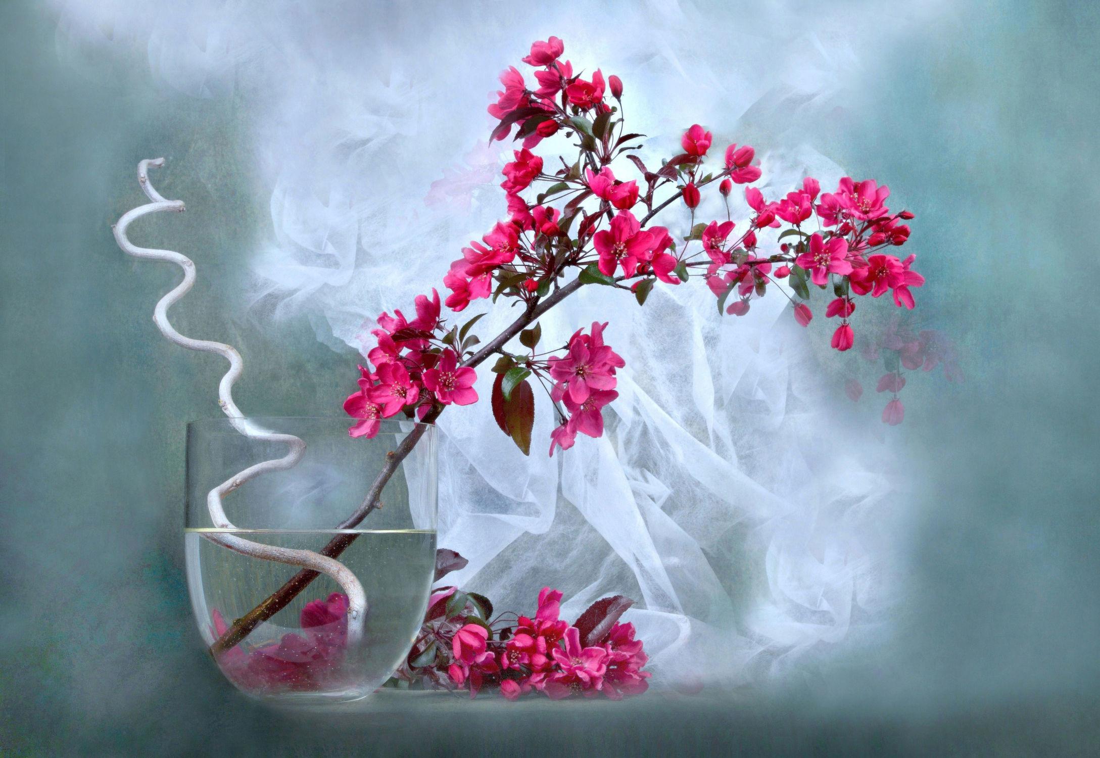 Bild mit Pflanzen, Blumen, Blume, Pflanze, romantik, Strauch, Floral, Stilleben, Blüten, Florales, blüte, romantisch, Liebe, Zweige, Hochzeit, Blumenvase, Heirat, Zweig, zen, paare, verliebte, vase, heiraten, blütenstrauch