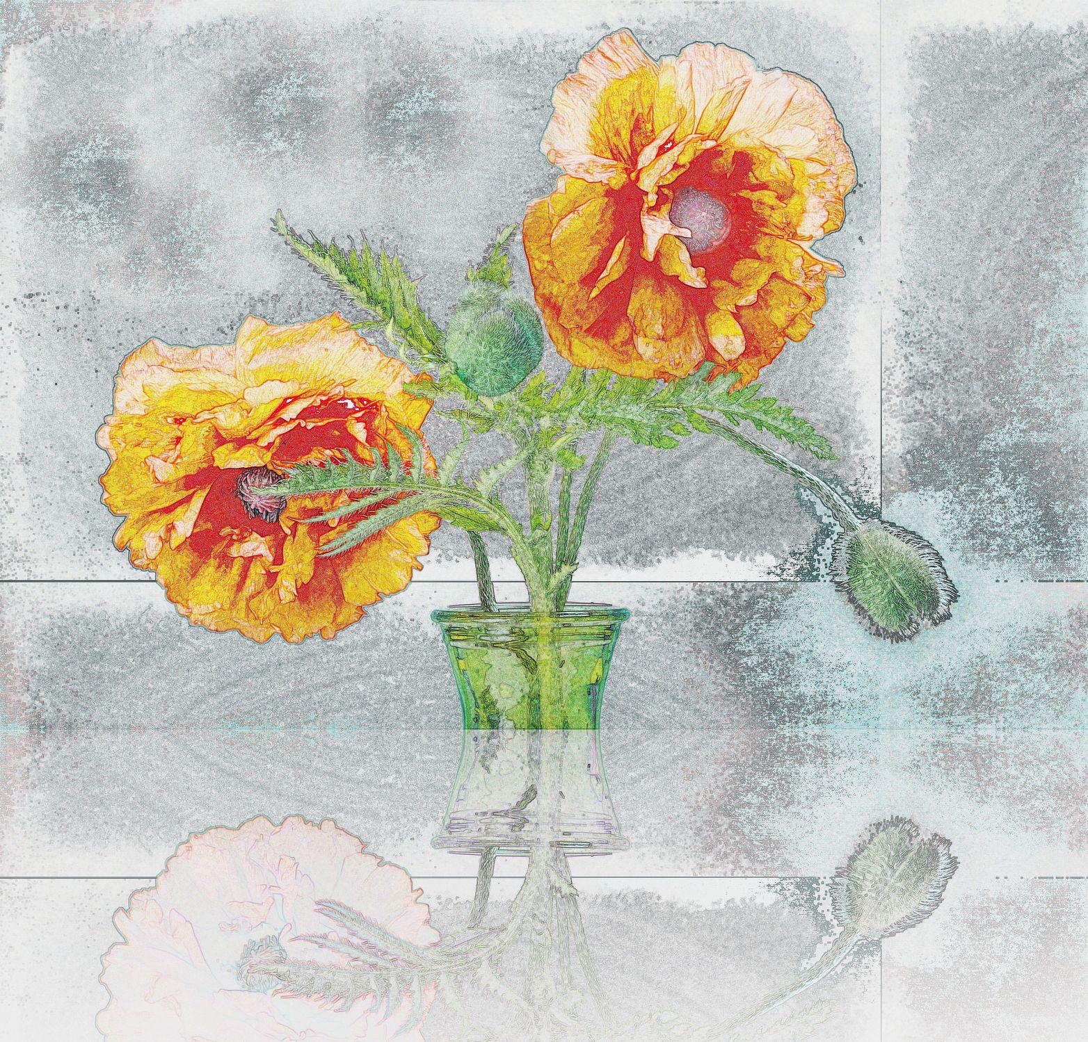 Bild mit Kunst, Pflanzen, Blumen, Mohn, Zeichnung, Blume, Pflanze, Mohnblume, Mohnblüte, Floral, Florales, Mohnblumen, weich, soft, mohnblüten