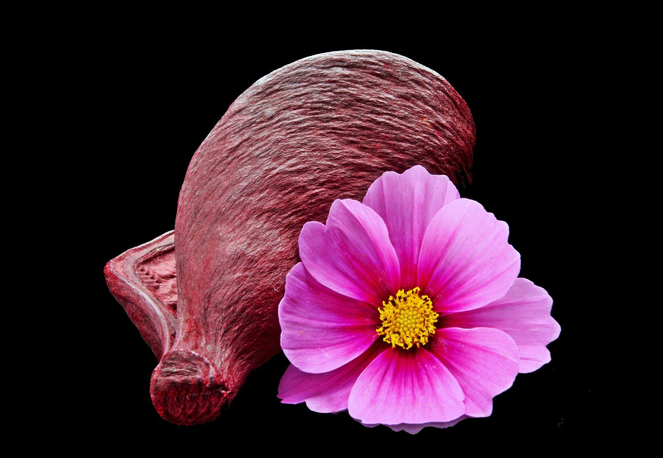 Bild mit Pflanzen, Blumen, Blume, Pflanze, Muschel, Floral, Stilleben, cosmea, Blüten, Florales, blüte