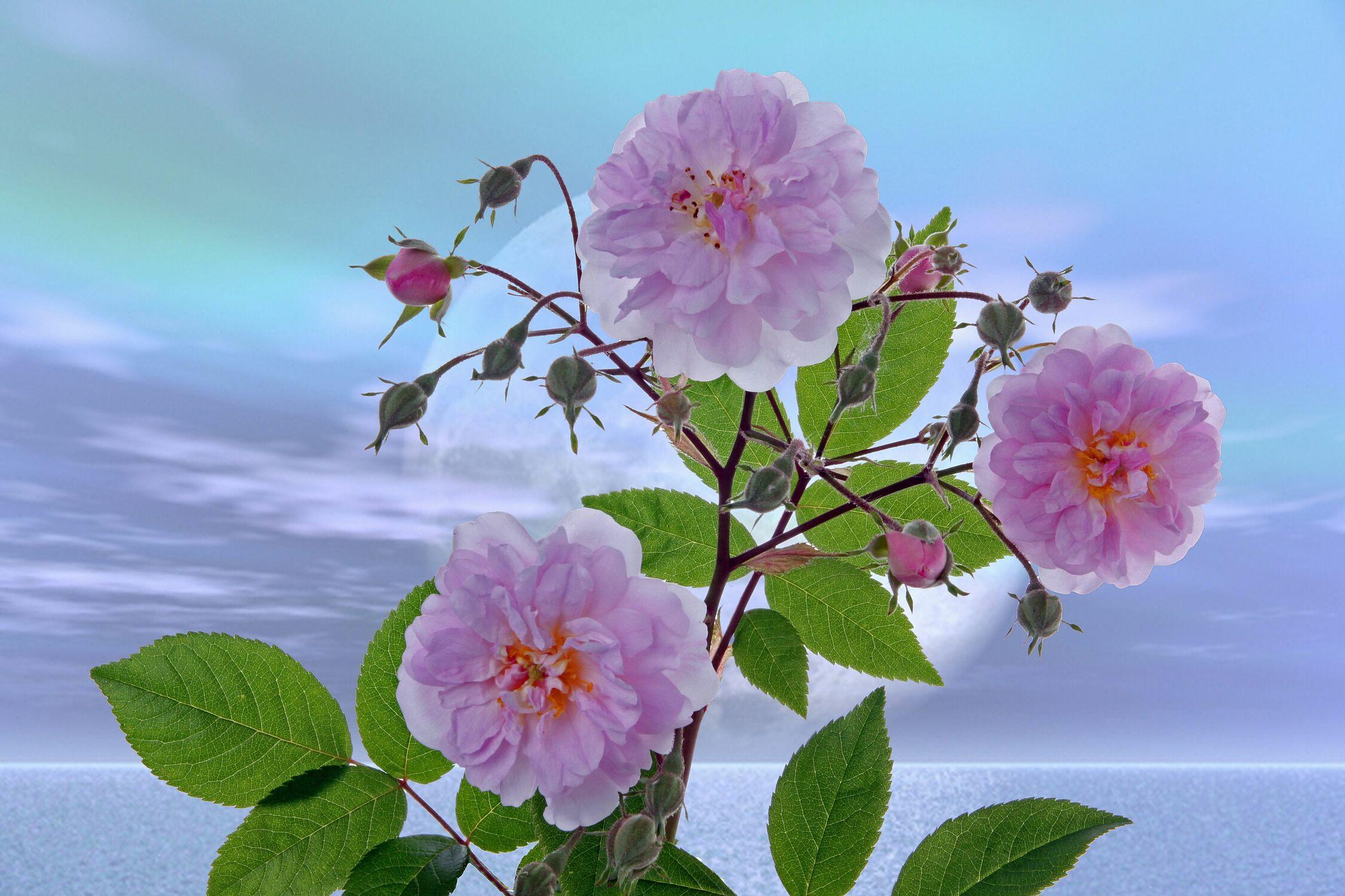 Bild mit Natur, Wasser, Pflanzen, Himmel, Wolken, Blumen, Sonnenuntergang, Sonne, Meer, Blume, Pflanze, See, Stilleben, Blüten, blüte