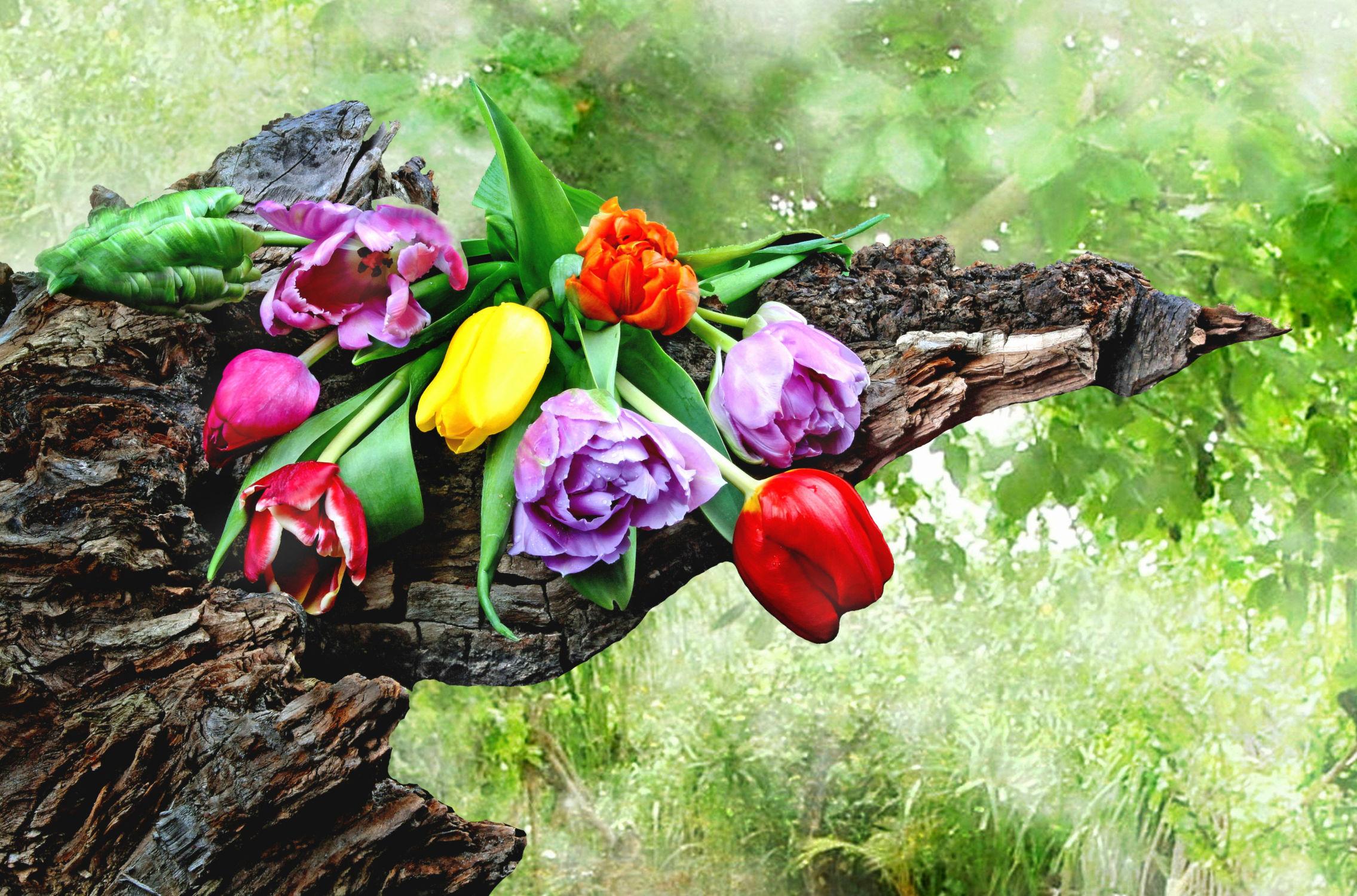 Bild mit Bäume, Blumen, Wald, Baum, Blume, Tulpe, Tulpen, Floral, Stilleben, Blüten, Florales, blüte