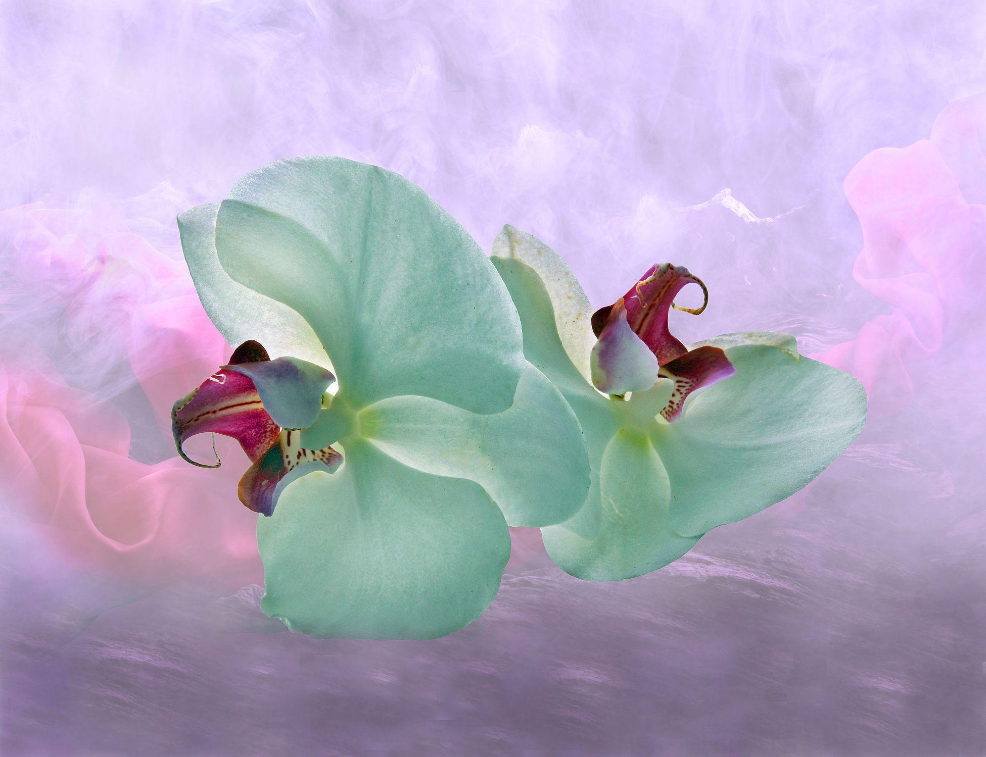 Bild mit Kunst, Pflanzen, Himmel, Wolken, Blumen, Orchideen, Nebel, Orchidee, Flora, Stilleben, Blüten, Florales