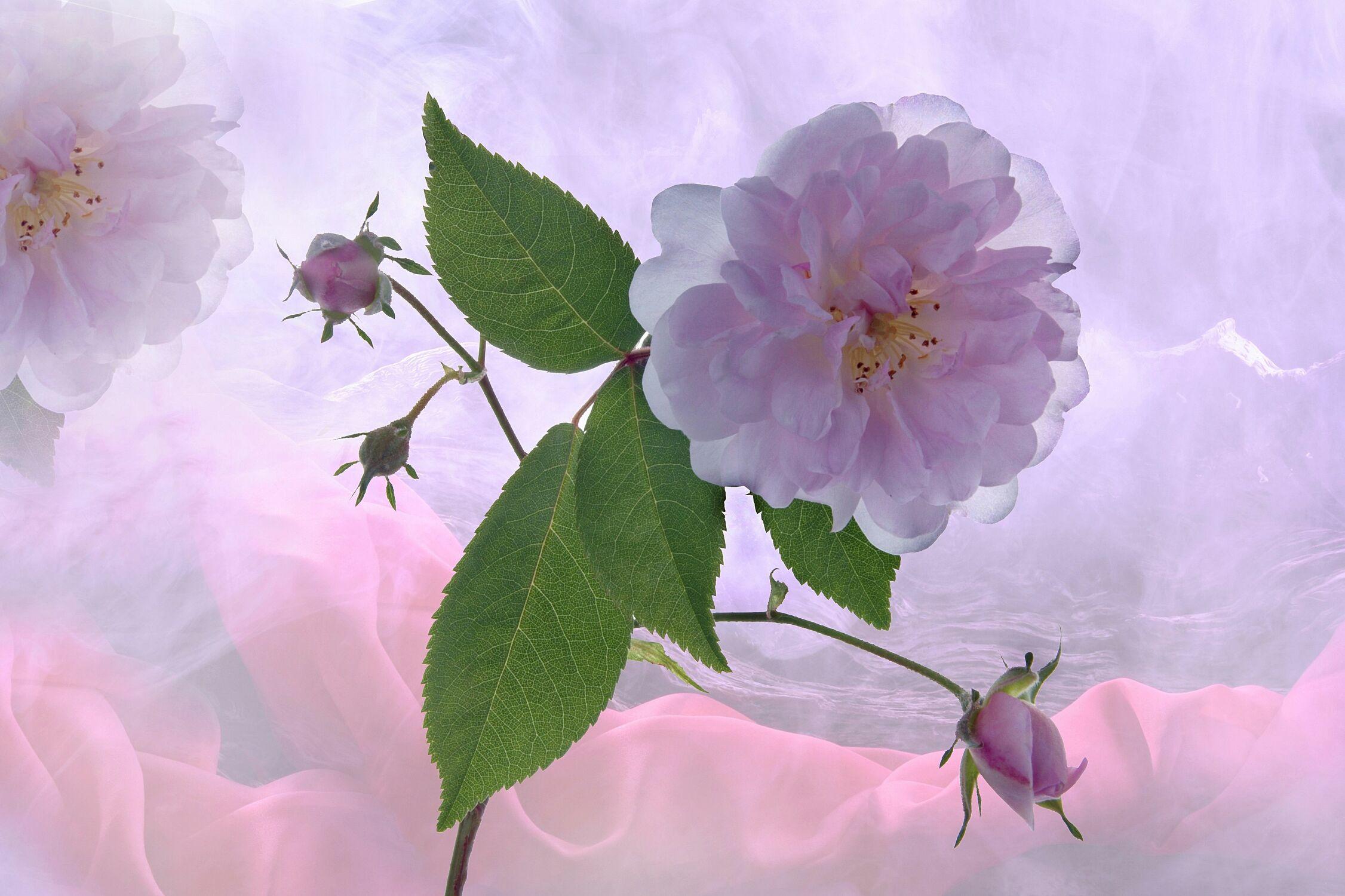 Bild mit Kunst, Pflanzen, Himmel, Wolken, Blumen, Blätter, Blume, Pflanze, Blatt, Floral, Stilleben, Blüten, blüte, weich